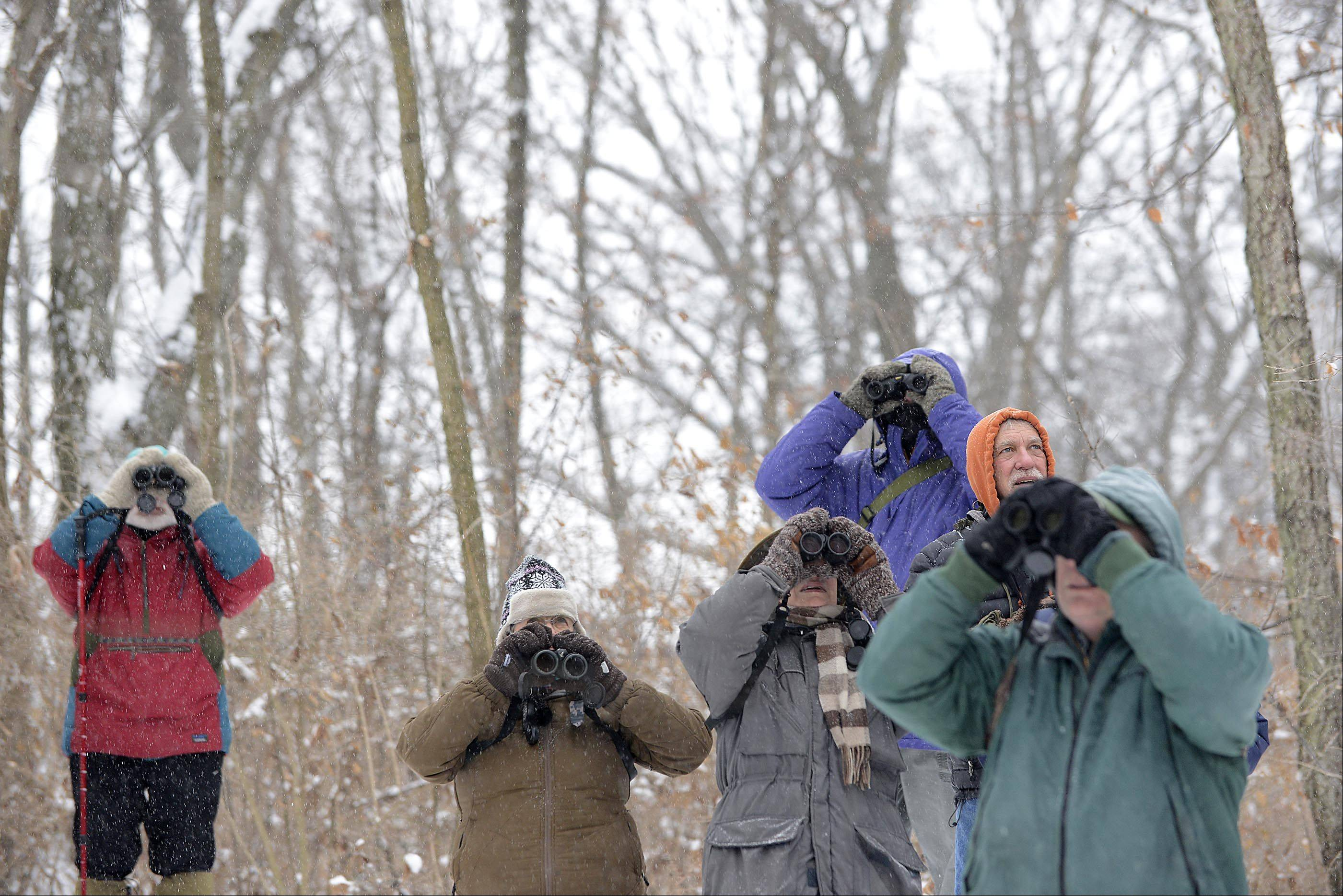 Binoculars were the tool of choice as bird enthuiasts took their annual walk through the Nelson Lake/Dick Young Forest Preserve in Batavia to start the new year.
