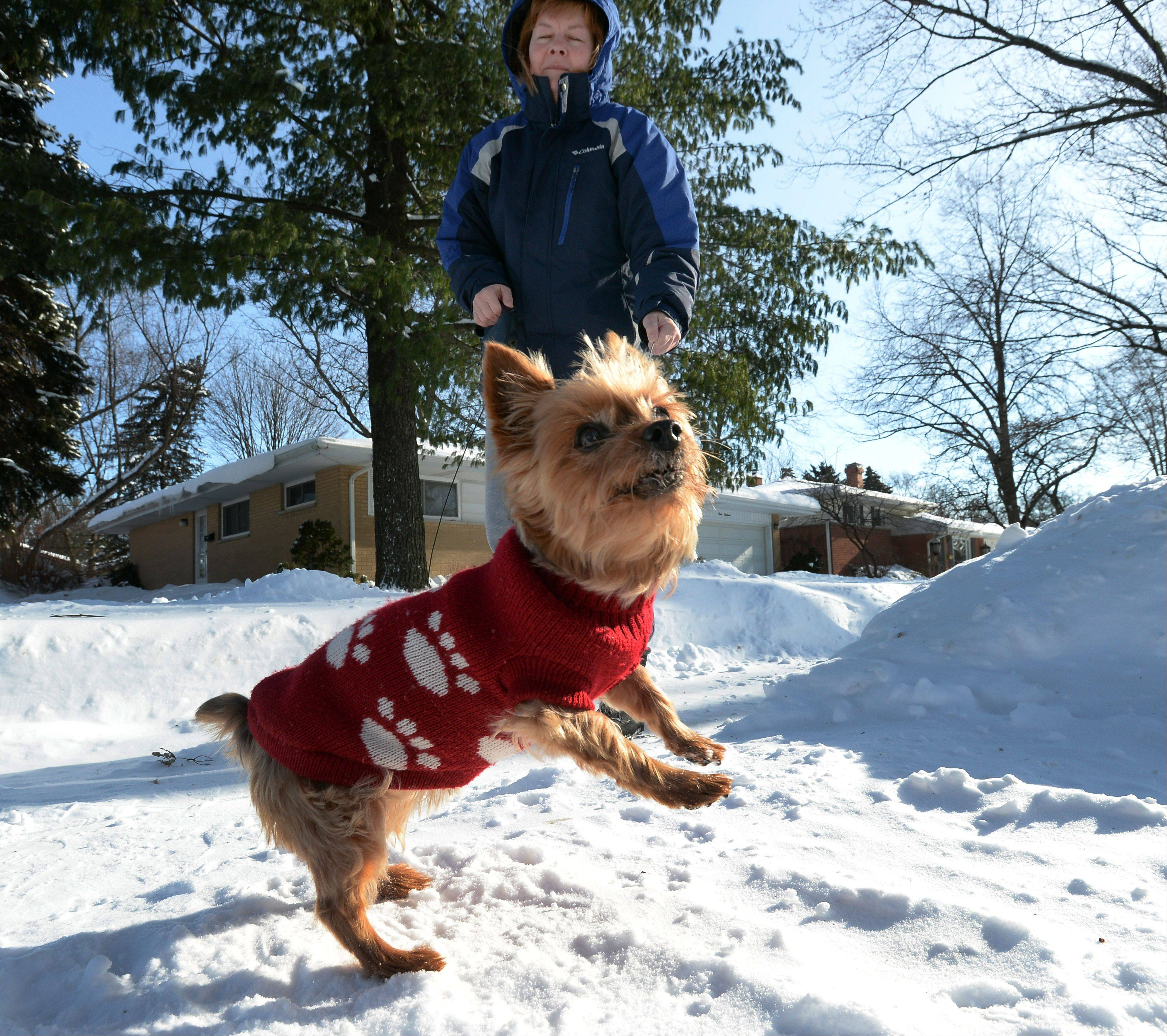 Keep pets inside; watch for 'hidden dangers' in snow