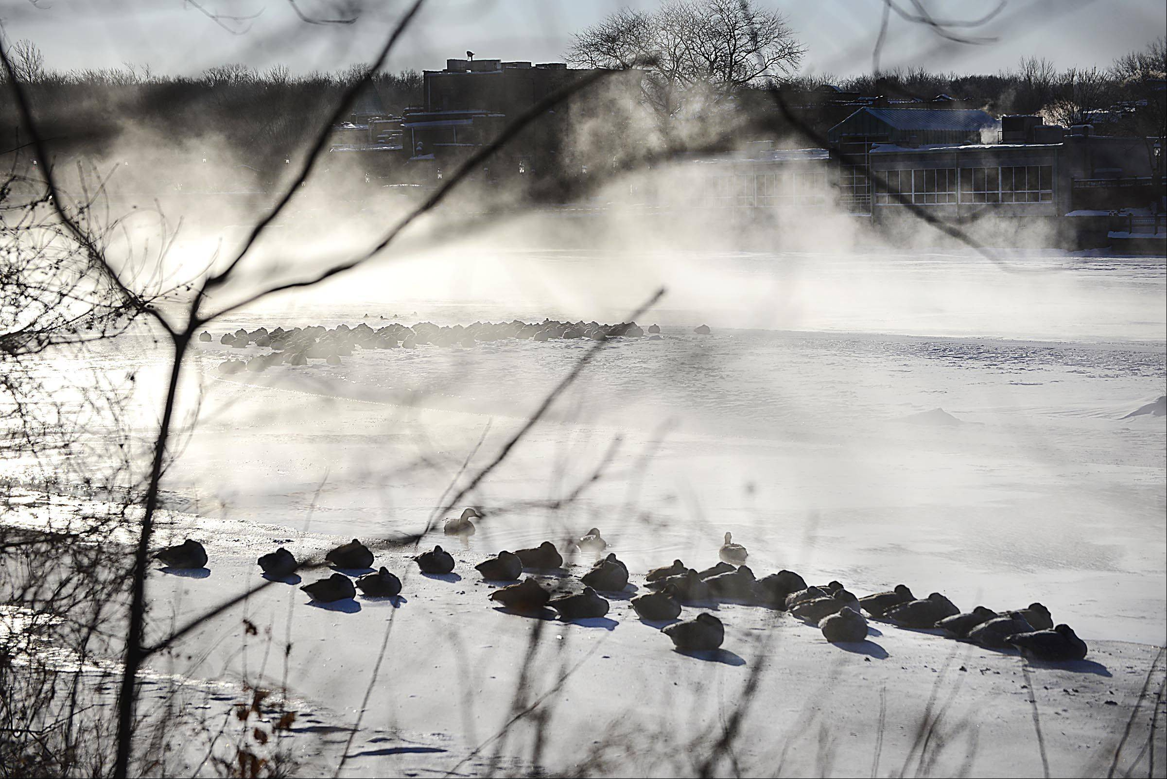Geese huddle together on the frozen Fox River in East Dundee during Monday's freezing temperatures.