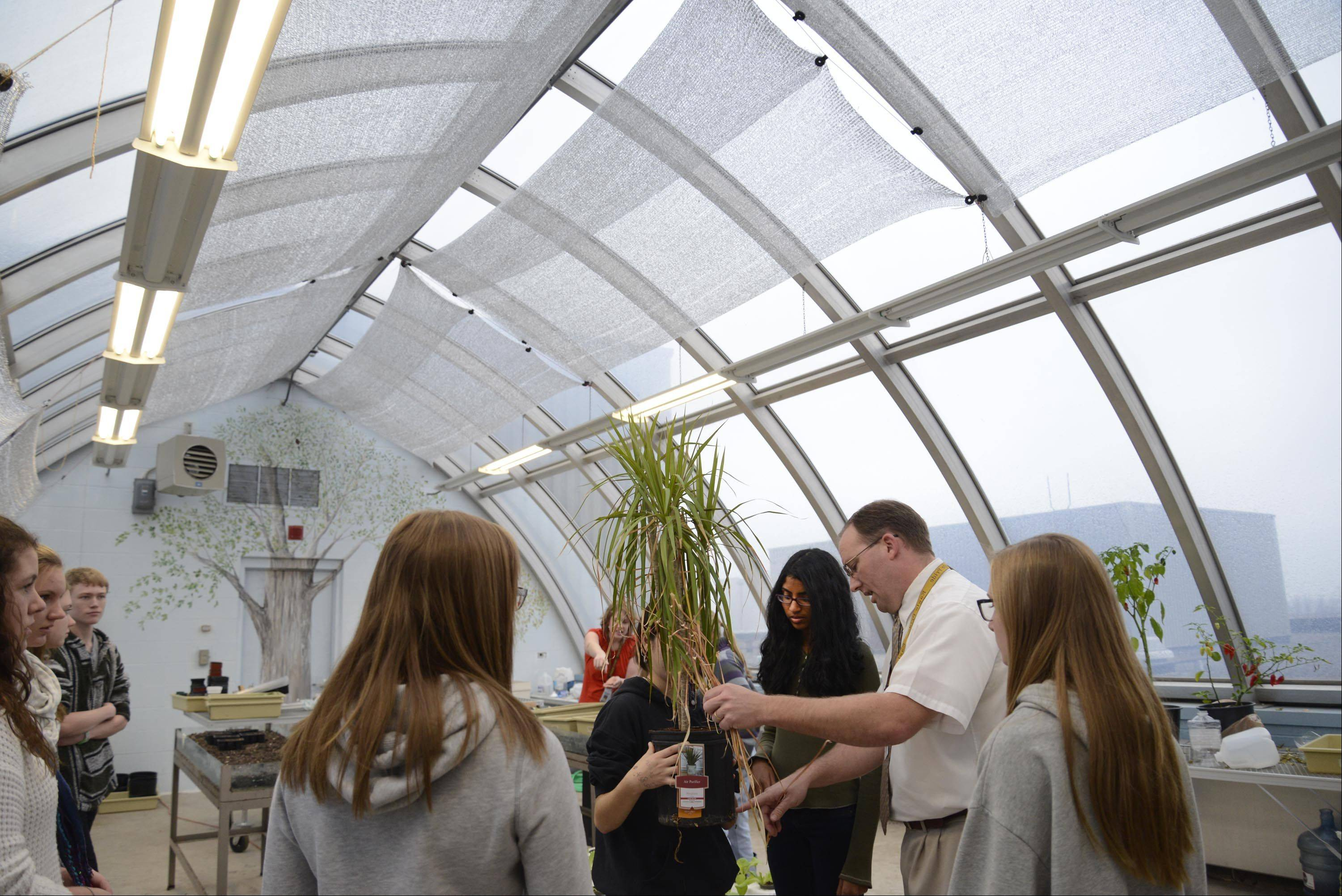 Terry Stroh, head of the science department at Jacobs High School, works with the Green Eagles club inside the greenhouse they renovated on the roof of the Algonquin school. Stroh and the club cleaned the old, unused greenhouse and are now growing food in it for local food pantries.