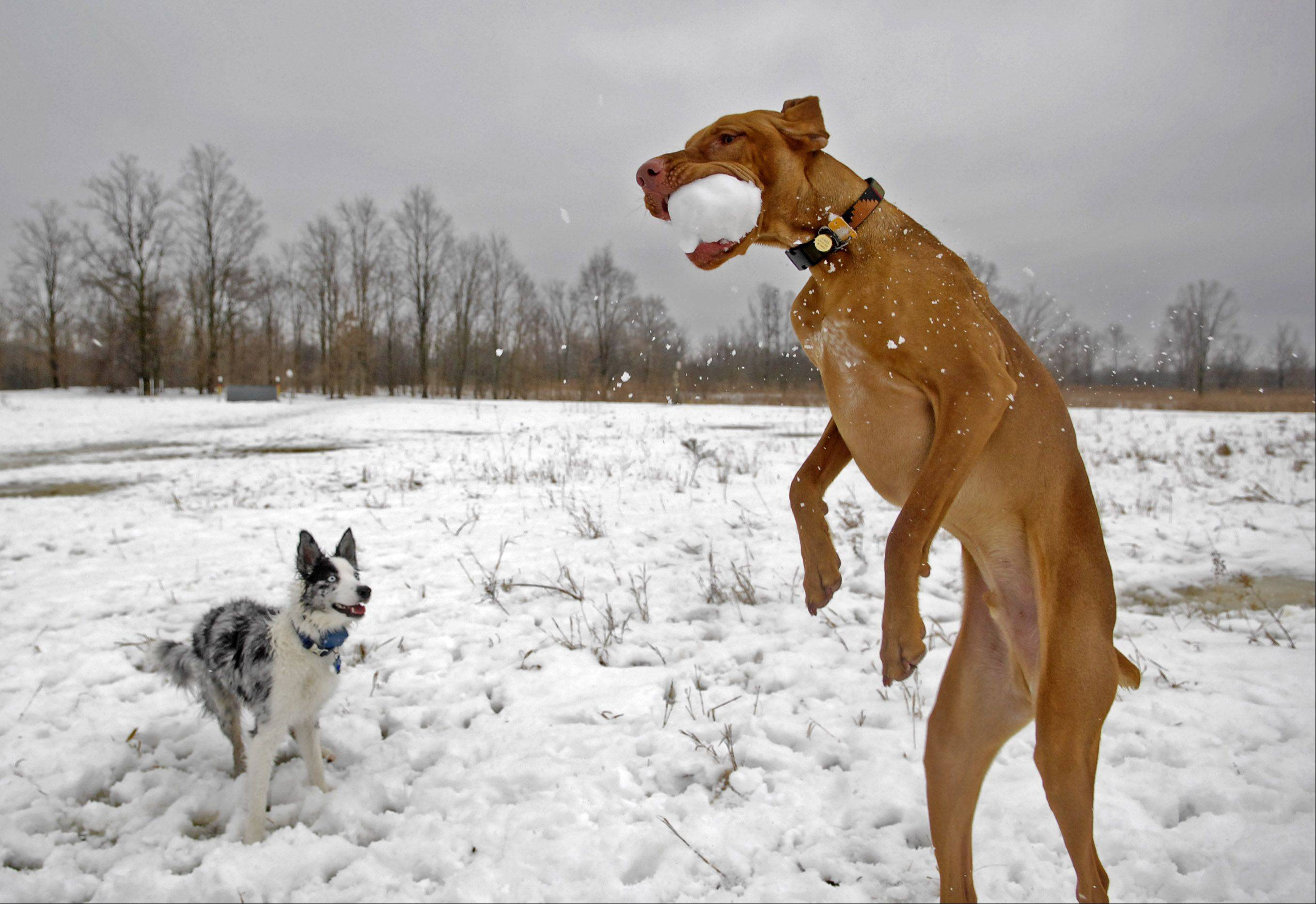 Big dogs and small dogs are separated in plans for a dog park in Melas Park in Mount Prospect.