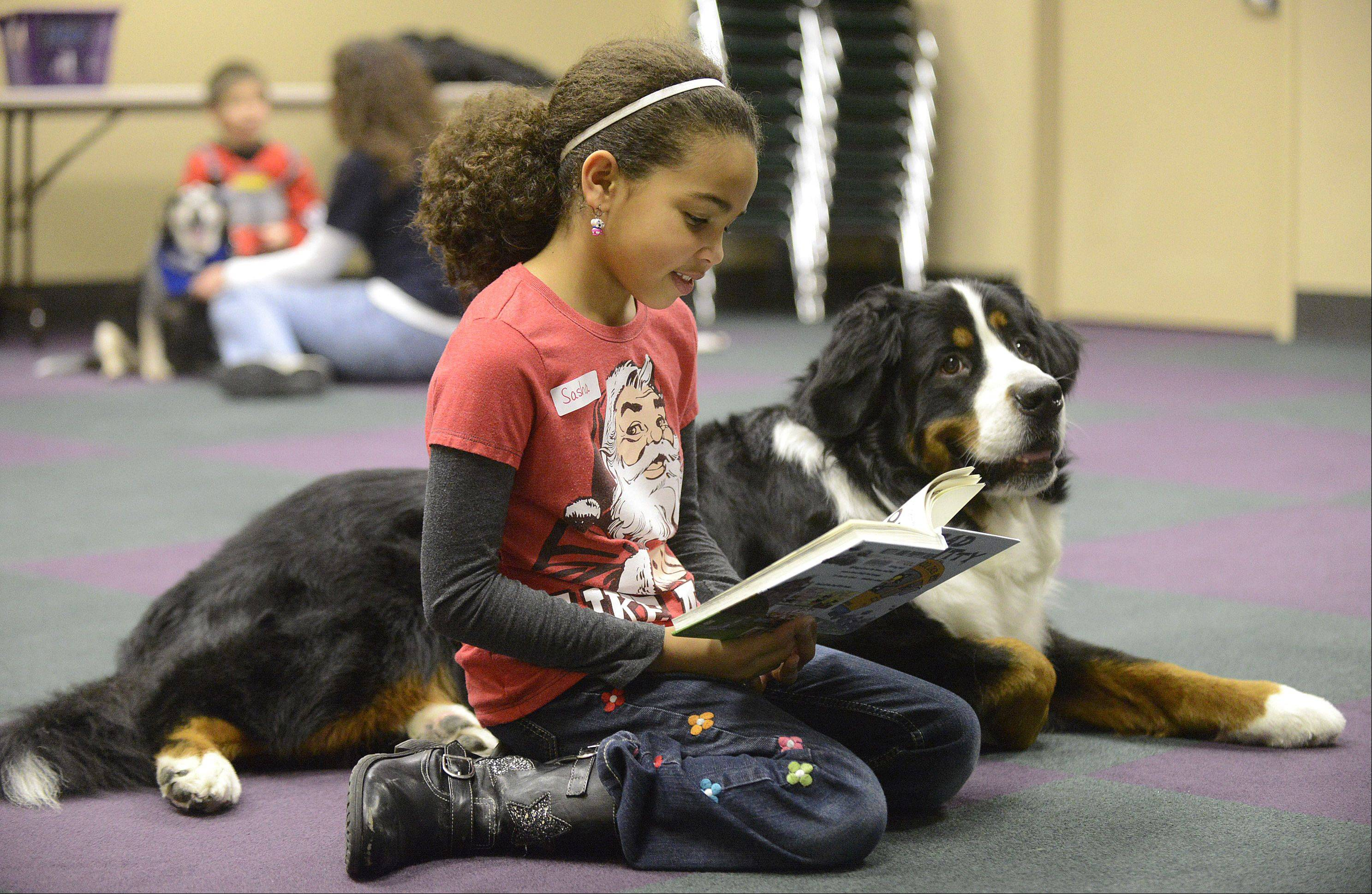"Laura Stoecker/lstoecker@dailyherald.comSasha Mix, 8, of Batavia, reads to Bozeman, 5, owned by Gail Banning, of Aurora, at Batavia Public Library's ""Paws for Tales"" reading program on Saturday. First through fourth-graders were invited to practice their reading skills by reading aloud to trained therapy dogs from the Naperville Area Humane Society. This is the fourth time the group has been to the library, with more sessions coming soon. This is Sasha's first time reading to a dog and Bozeman has been in the program for two years."