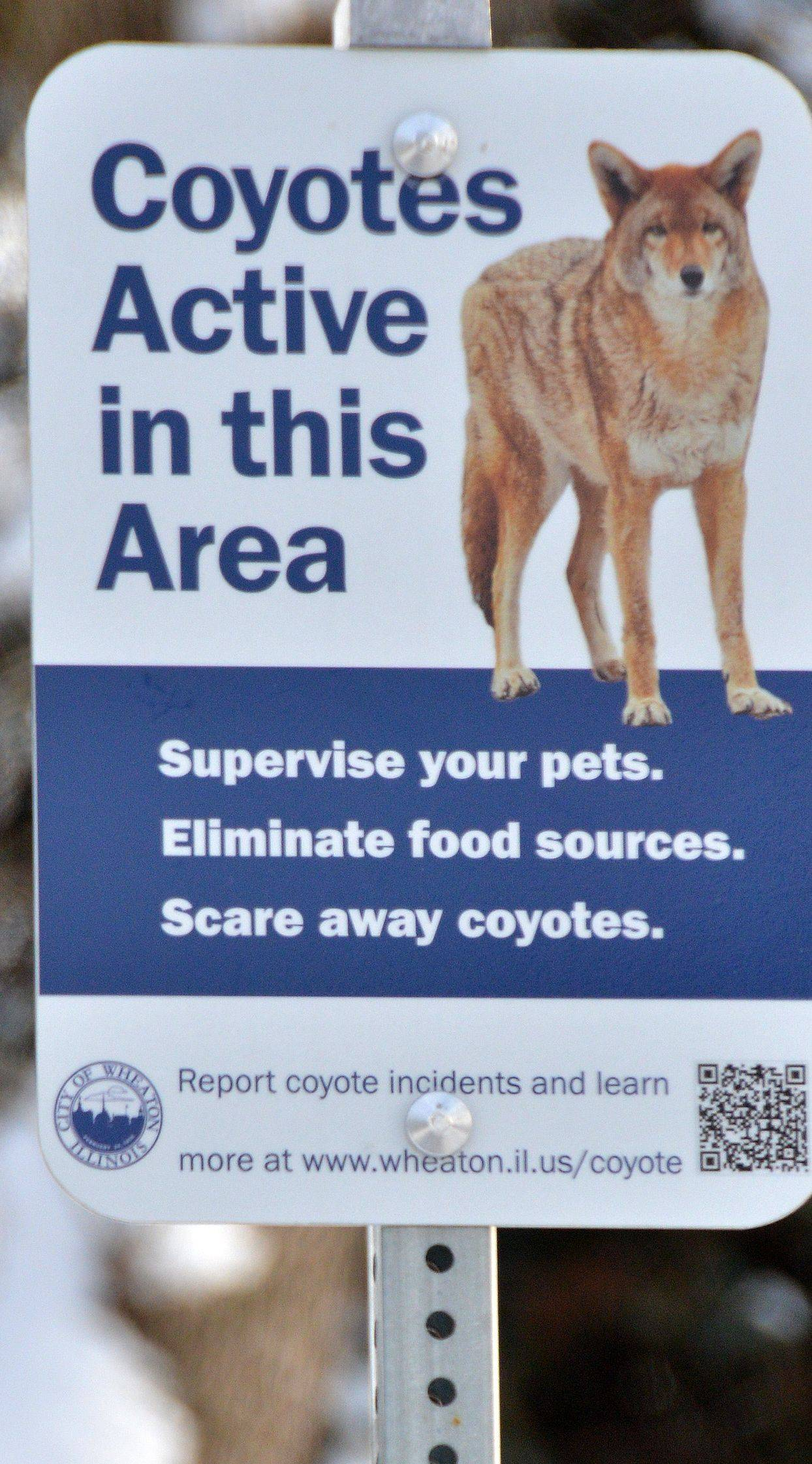 A sign on display near Foothill Drive and Gables Boulevard in Wheaton warns residents to be on the lookout for coyotes. The signs were recently installed after three reports of coyotes attacking pets in Wheaton.