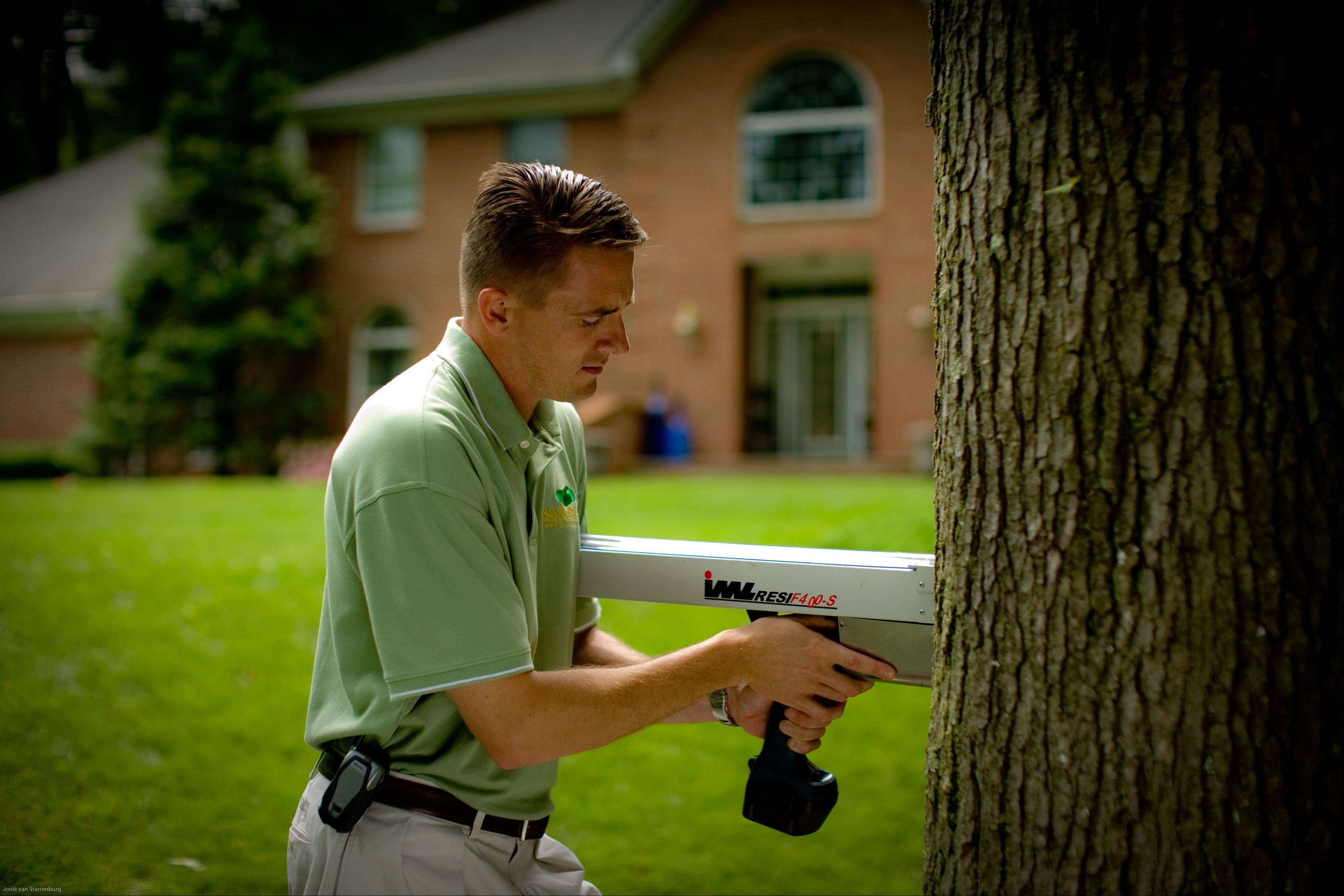 An arborist uses a resistograph to detect tree decay, which can help determine a tree's stability.