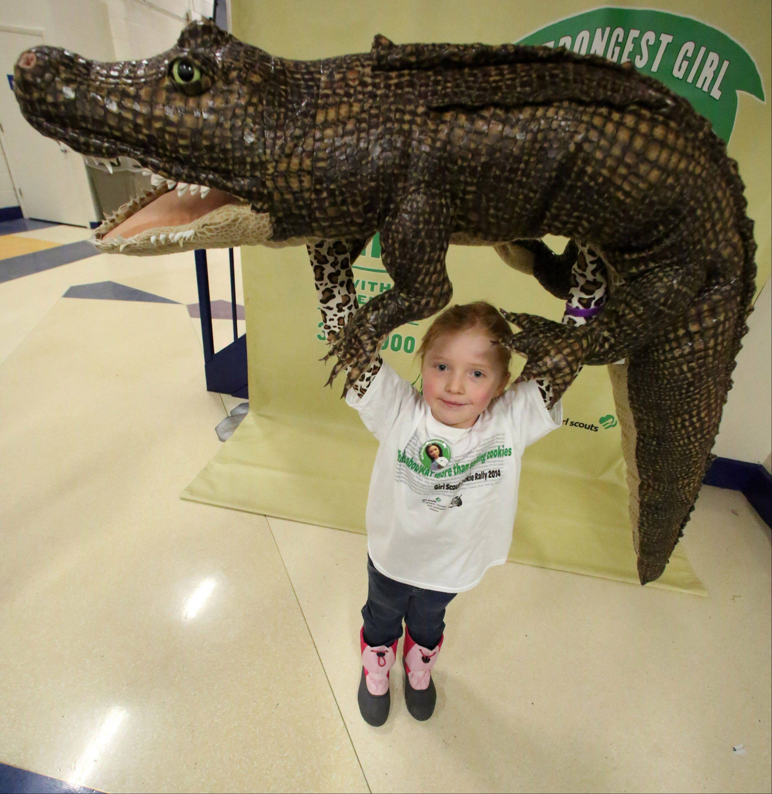 Girl Scout Josephine Larson, 8, of Lindenhurst with Troop 40138 holds up a man-made alligator at the fifth annual Girl Scouts Cookie Kickoff Rally held Saturday at Allstate Arena in Rosemont. The alligator is used to show the strength of the girls.