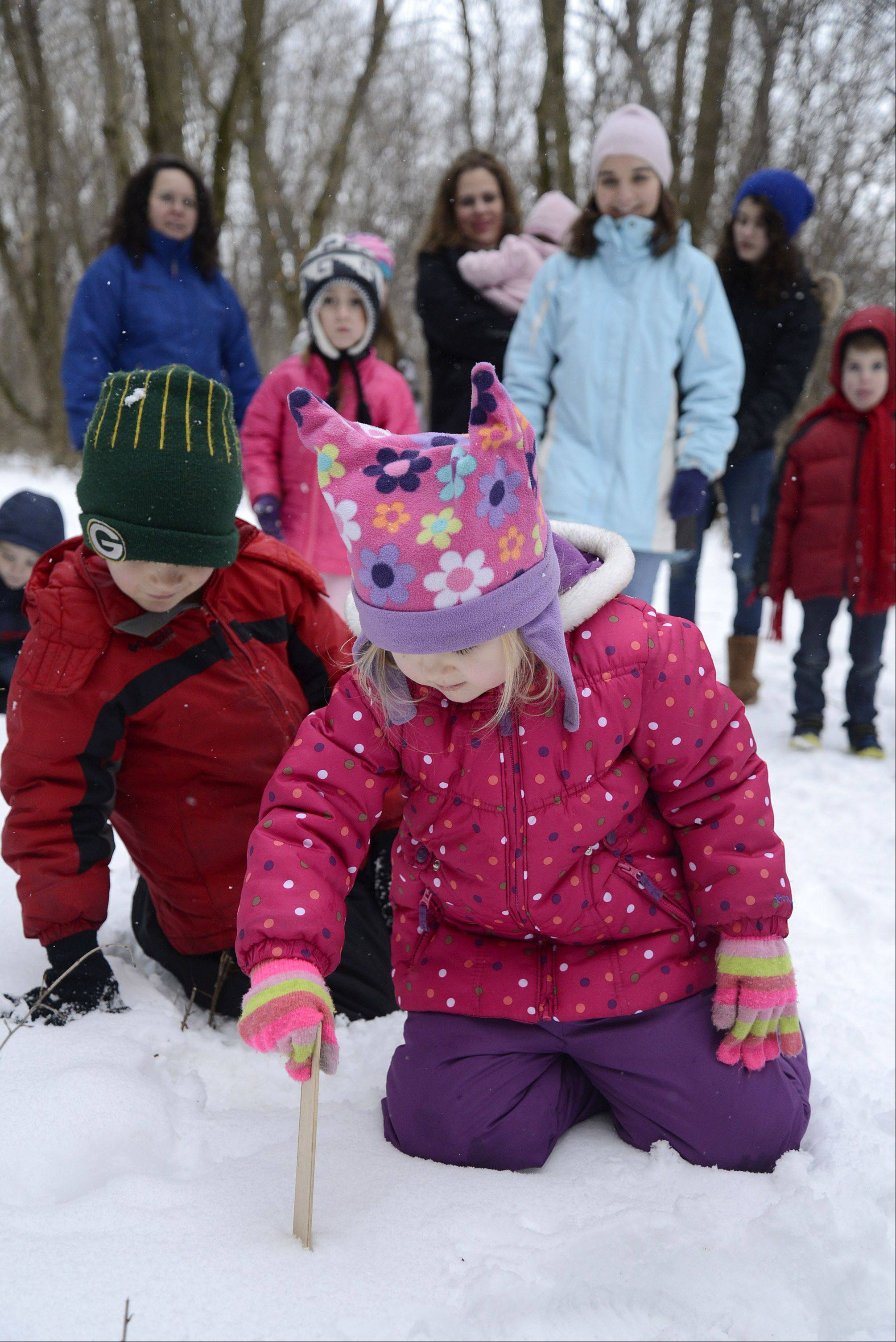"Kathleen Seckel, 5, of St. Charles, and her brother, Joe, 7, use a ruler to measure a 5-inch snow drift during the ""Homeschool Explorations: The Science of Snow"" program led by Kane County Forest Preserve naturalist Josh Libman at Leroy Oakes in St. Charles on Thursday. The little naturalists measured drifts from 5 to 9 inches while on the trail. The siblings just started being home schooled last week and this was their first time attending one of the programs offered by the forest preserve."