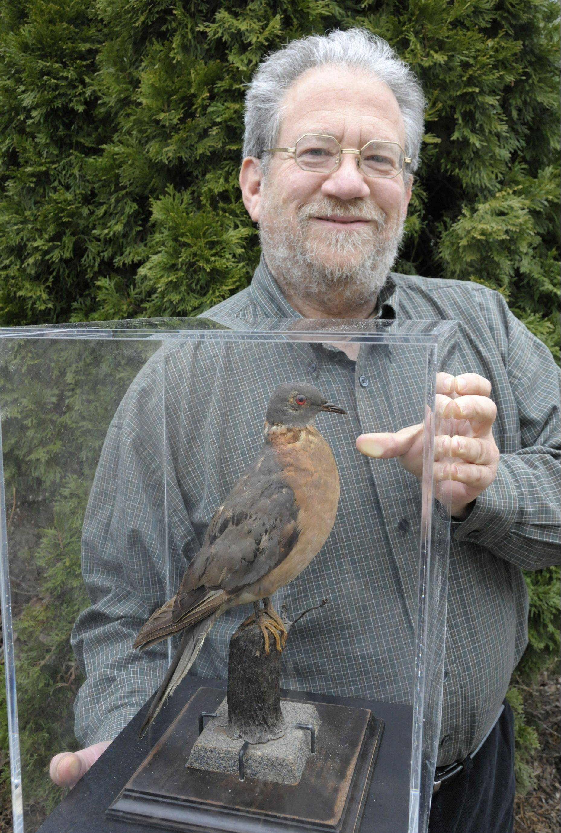 "Joel Greenberg of Westmont, displaying his stuffed passenger pigeon, has recently released a book titled ""A Feathered River Across the Sky: The Passenger Pigeon's Flight to Extinction."" Greenberg will discuss the passenger pigeon and sign copies of his book on March 5 in St. Charles."