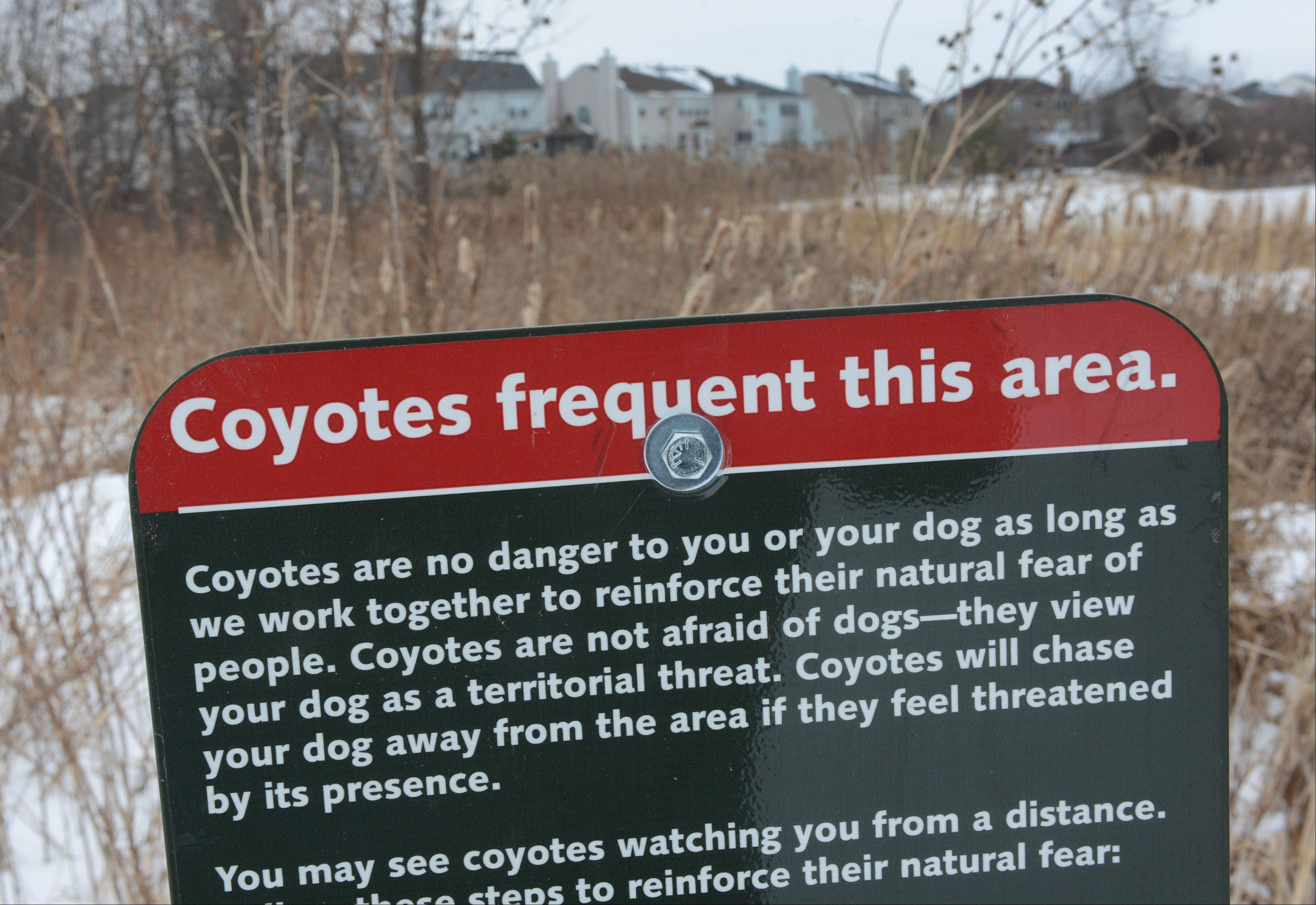 A sign has been posted at the Millennium Trail entrance along Gossell Road near Wauconda alerting people about coyote activity in the area of the Orchard Hills subdivision.