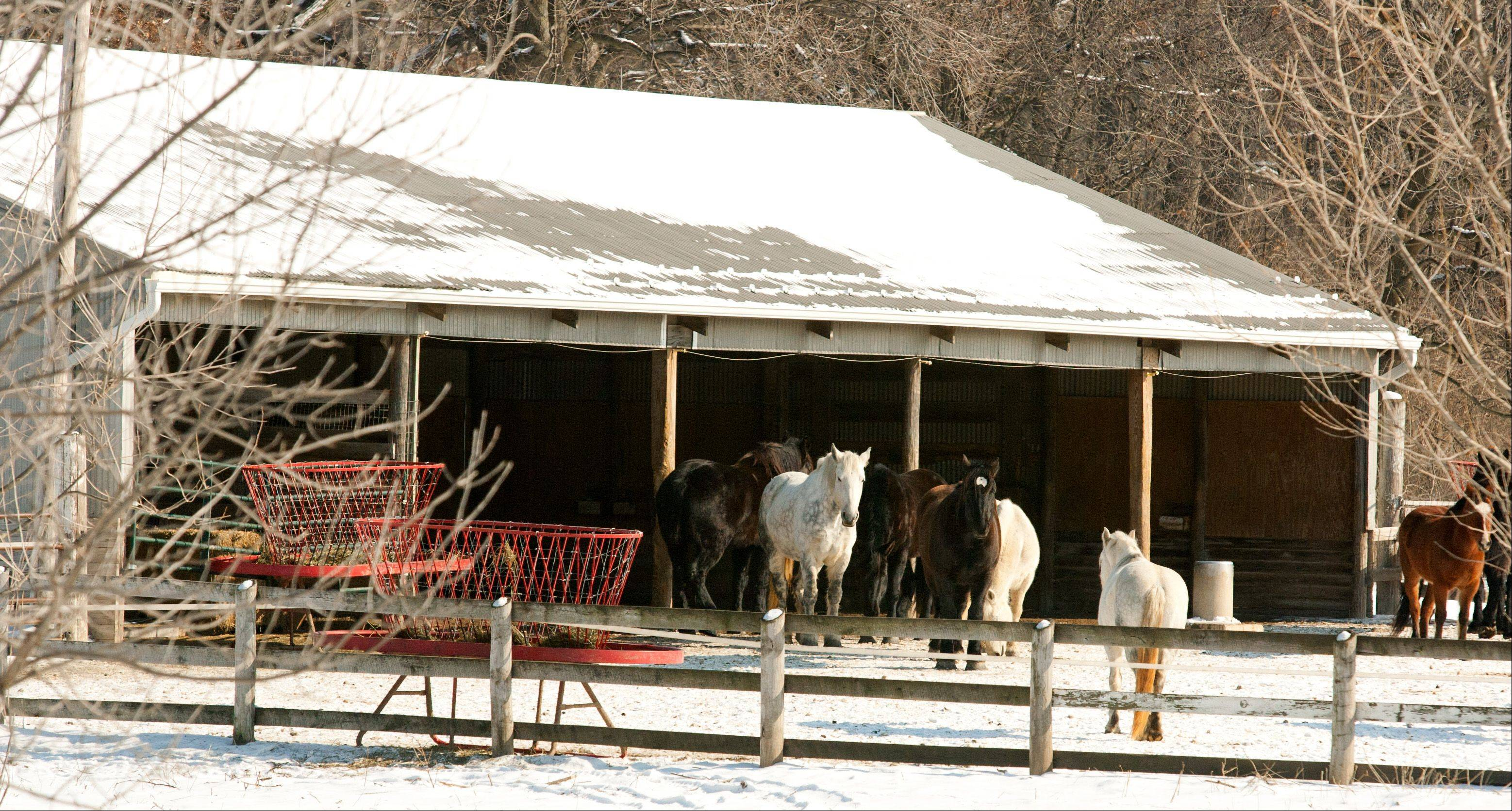 DuPage County Forest Preserve commissioners are expected to decide whether to follow an expert�s recommendation and retrain lesson horses from Danada Equestrian Center in Wheaton.