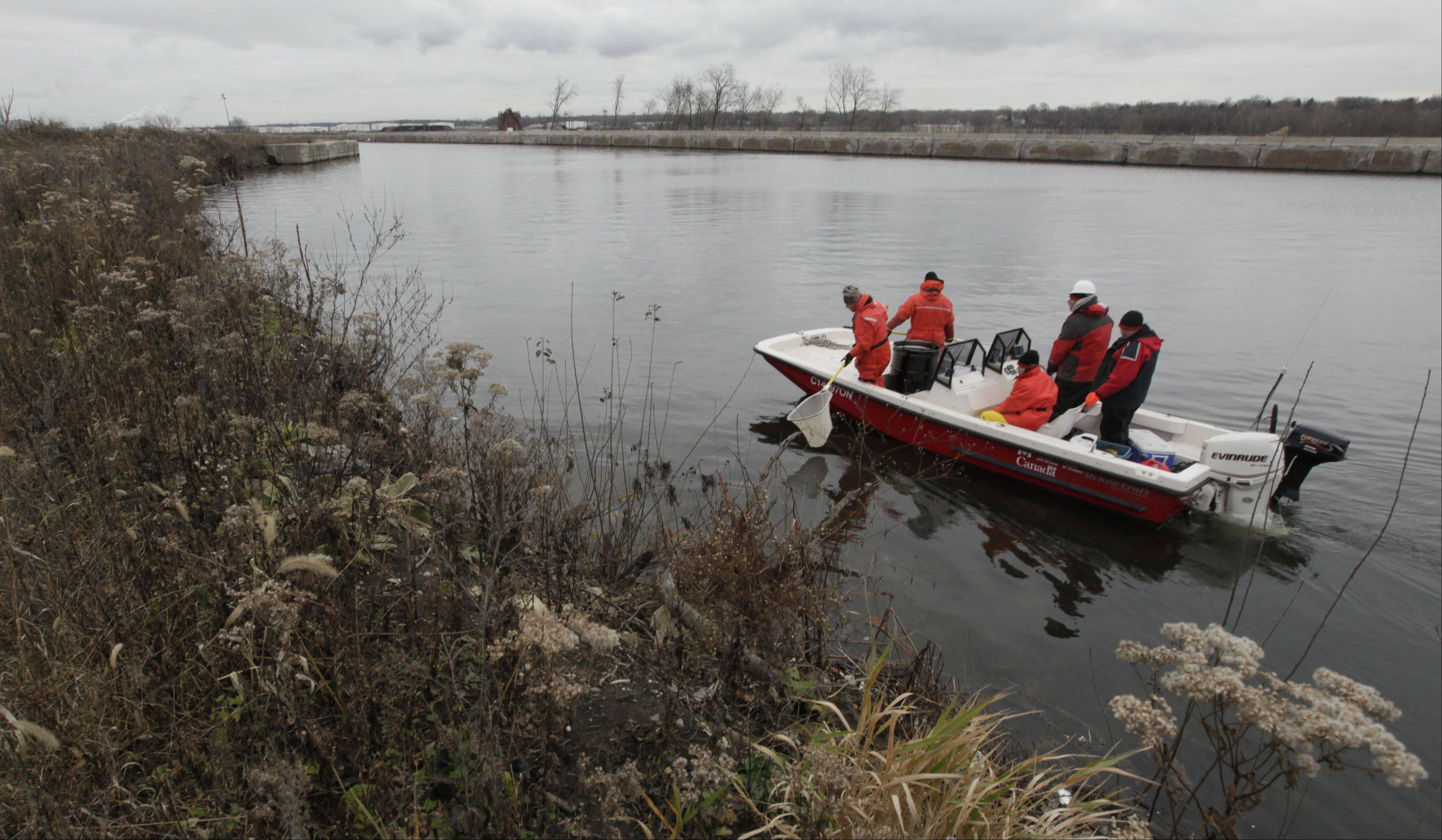 Crews search for Asian carp in the Chicago Sanitary and Ship Canal in Lockport, Ill.