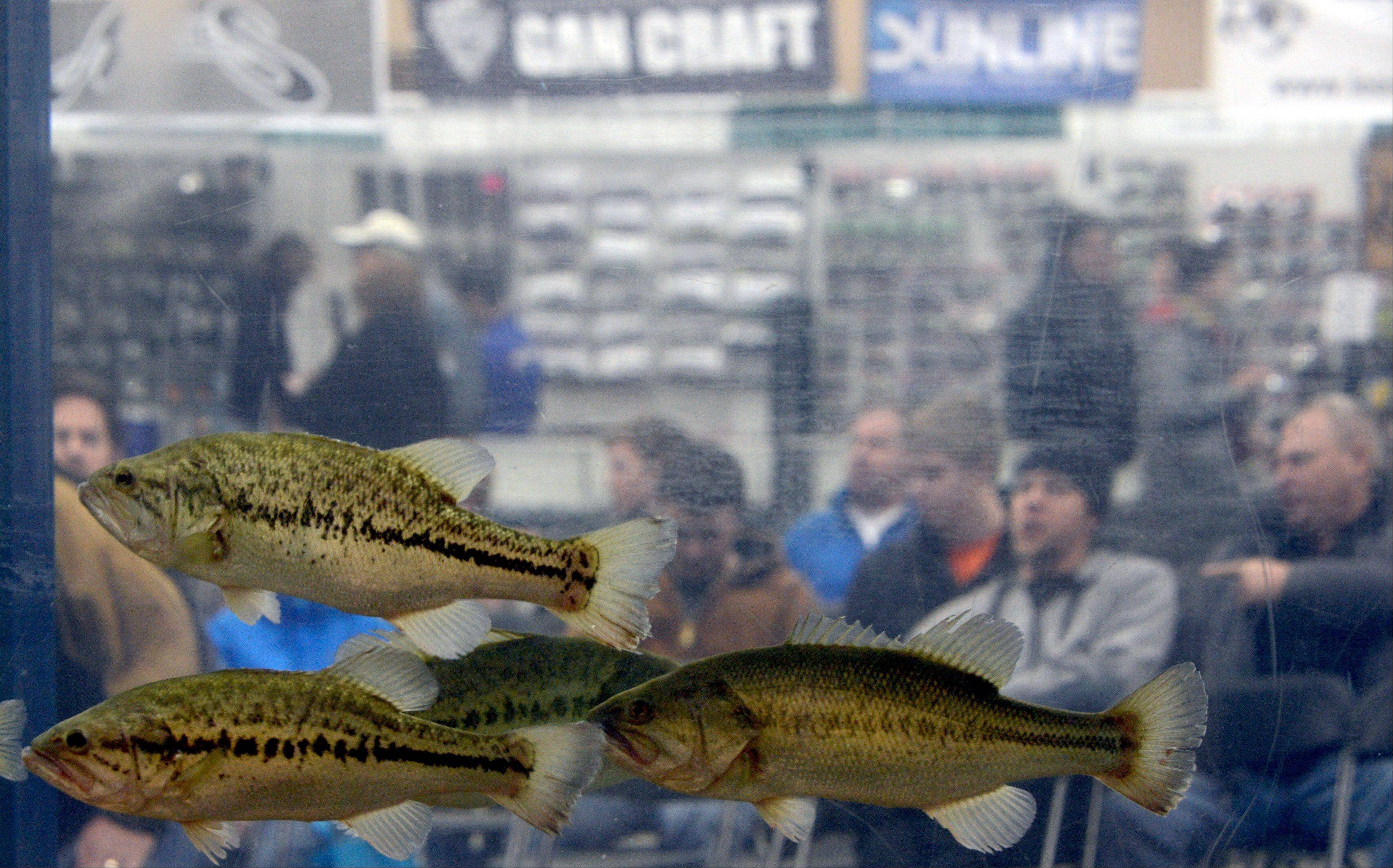 People await a presentation at the 5,000-gallon fish tank during the Chicagoland Fishing Travel & Outdoor Expo at Renaissance Schaumburg Hotel and Convention Center.