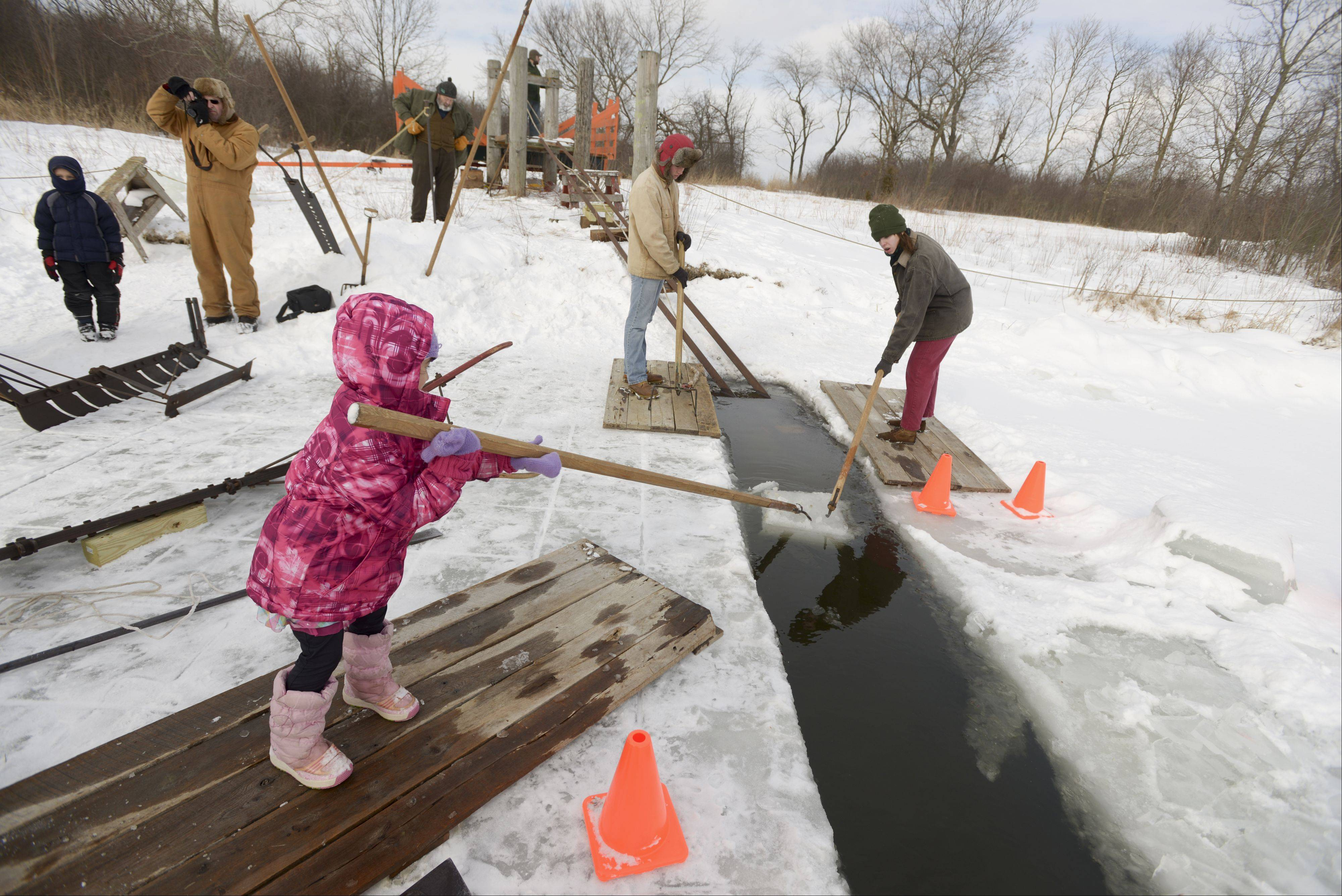 "Maria Metoki, 4, of Hoffman Estates moves an ice block down toward shore the ""old fashioned way"" with a long pike at Kline Creek Farm's Ice Harvesting event Sunday in West Chicago. The event showed visitors how ice was harvested and stored in the late 19th century."