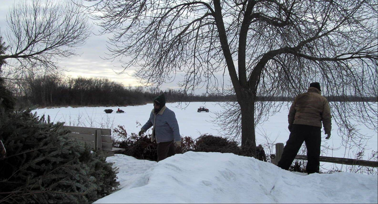 CFC volunteers freshen the nesting sites on Baker's Lake Island with discarded live Christmas trees from Barrington. Eighty to 100 trees were taken across the ice to the island.