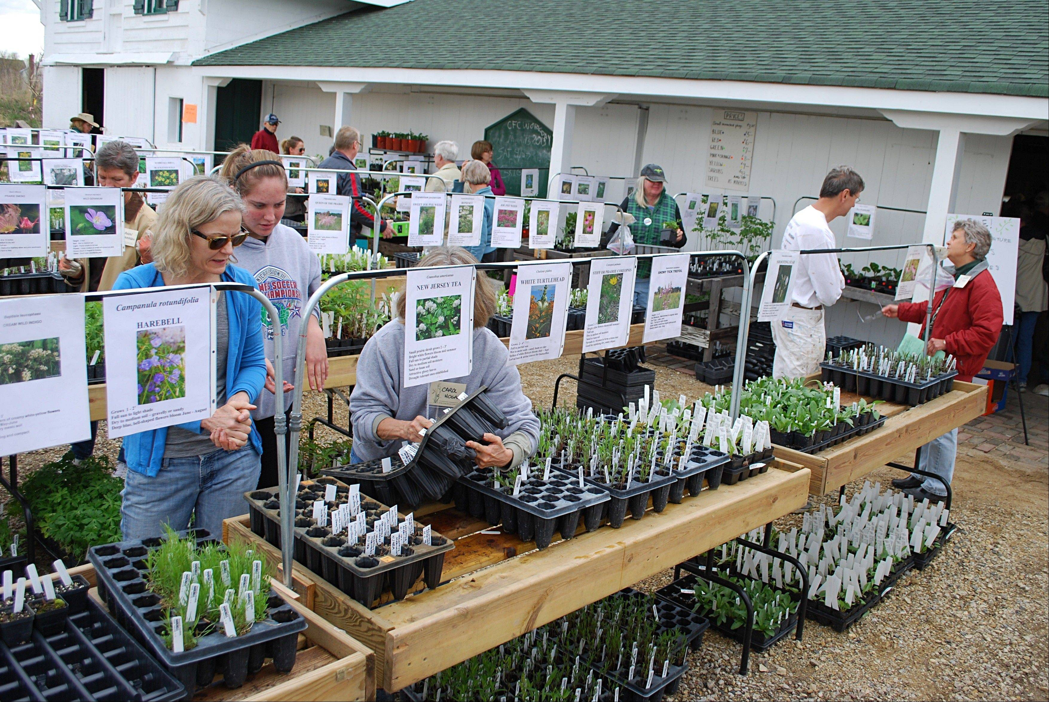Every June, the CFC holds its native plant sale to raise money and perpetuate native species in area gardens