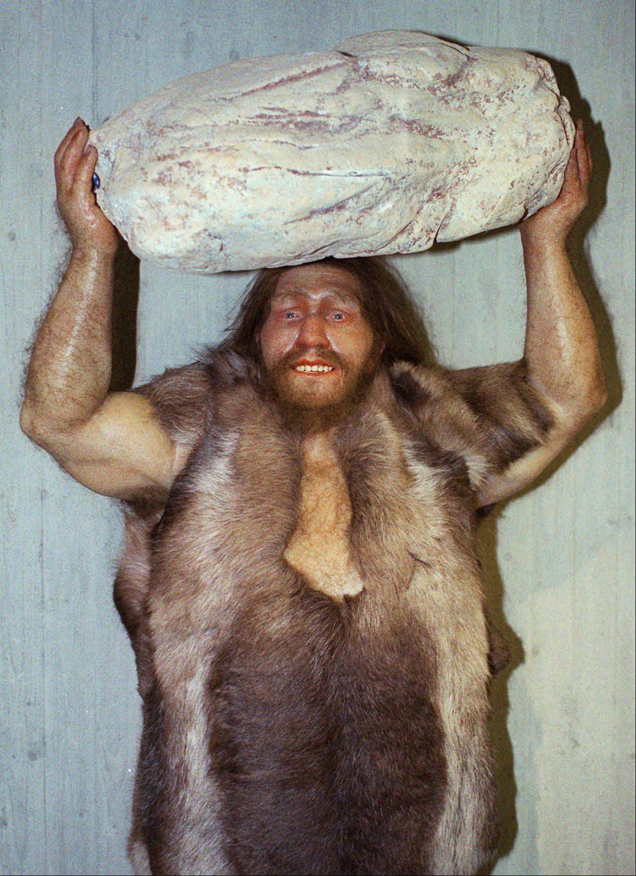 This is a replica of a Neanderthal man at the Neanderthal museum in Mettmann, western Germany. Much of the genes that help determine most people's skin and hair are much more Neanderthal than not, according to two new studies.