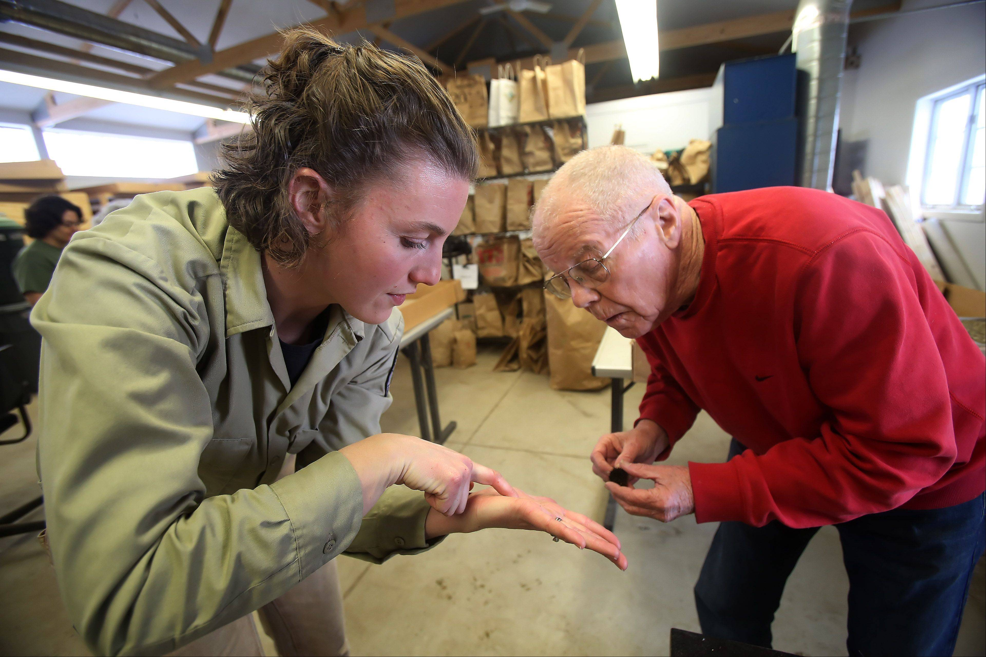 Kelly Schultz, nursery coordinator for the Lake County Forest Preserve District, shows volunteer Jim Jobes of Grayslake seeds from purple coneflowers. Volunteers process native seeds at the facility at the Rollins Savanna for use in restoration projects.