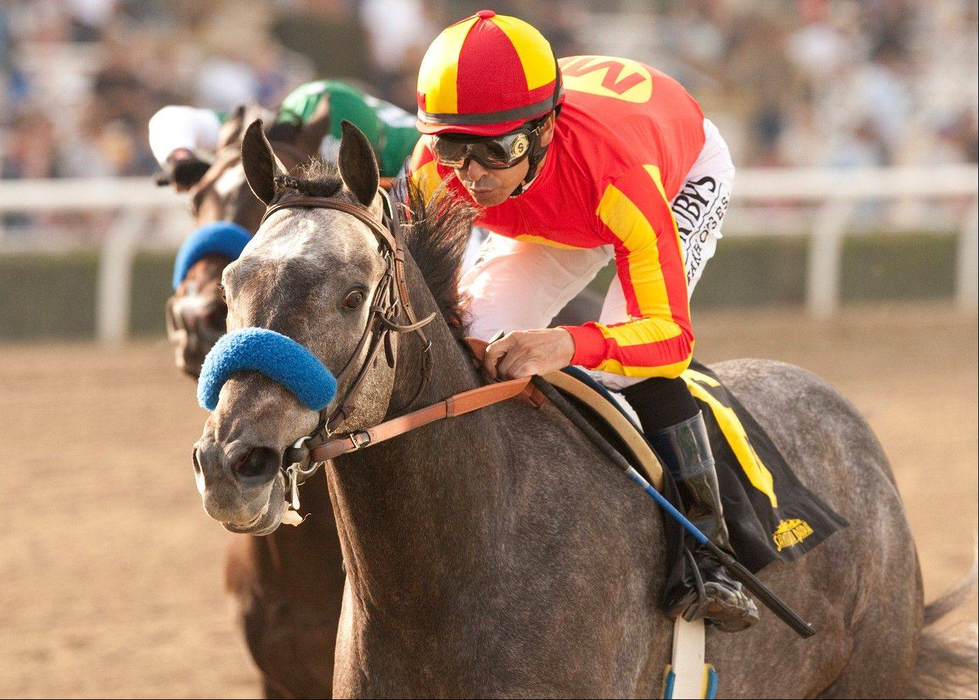 Midnight Hawk, with jockey Mike Smith aboard, won the Sham Stakes horse race on Jan. 11 at Santa Anita. Owned by Joel Quenneville, Midnight Hawk is a possible Kentucky Derby contender.