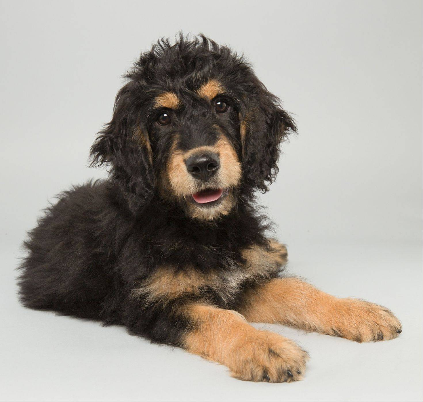 "Bach is a that will be one of the starters in Animal Planet's ""Puppy Bowl X"" airing Sunday."