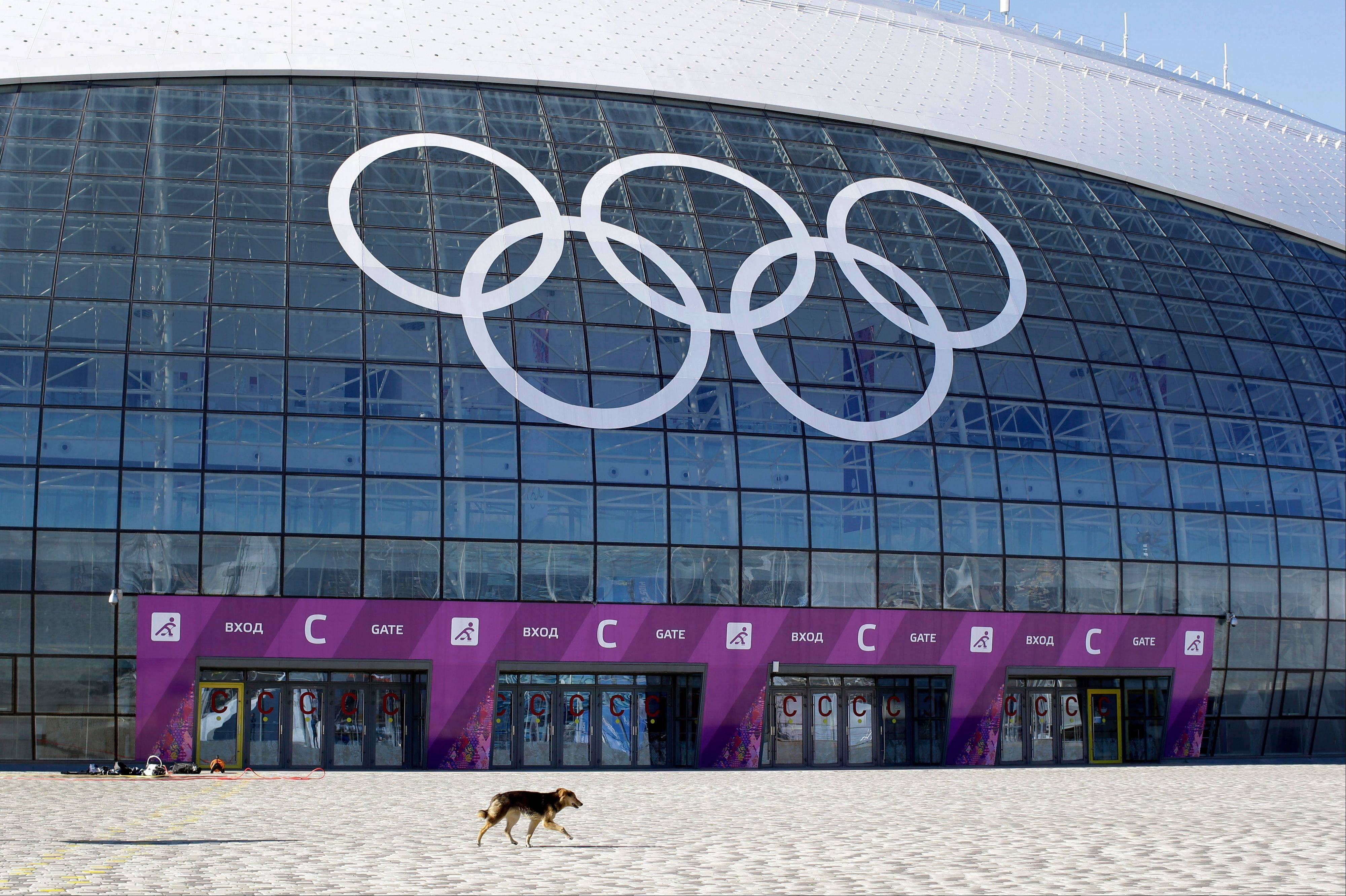 A stray dog walks outside the Ice Dome venue as preparations take place for the 2014 Winter Olympics Monday, Feb. 3, 2014, in Sochi, Russia. A pest control company which has been killing stray dogs in Sochi for years told The Associated Press on Monday that it has a contract to exterminate more of the animals throughout the Olympics.