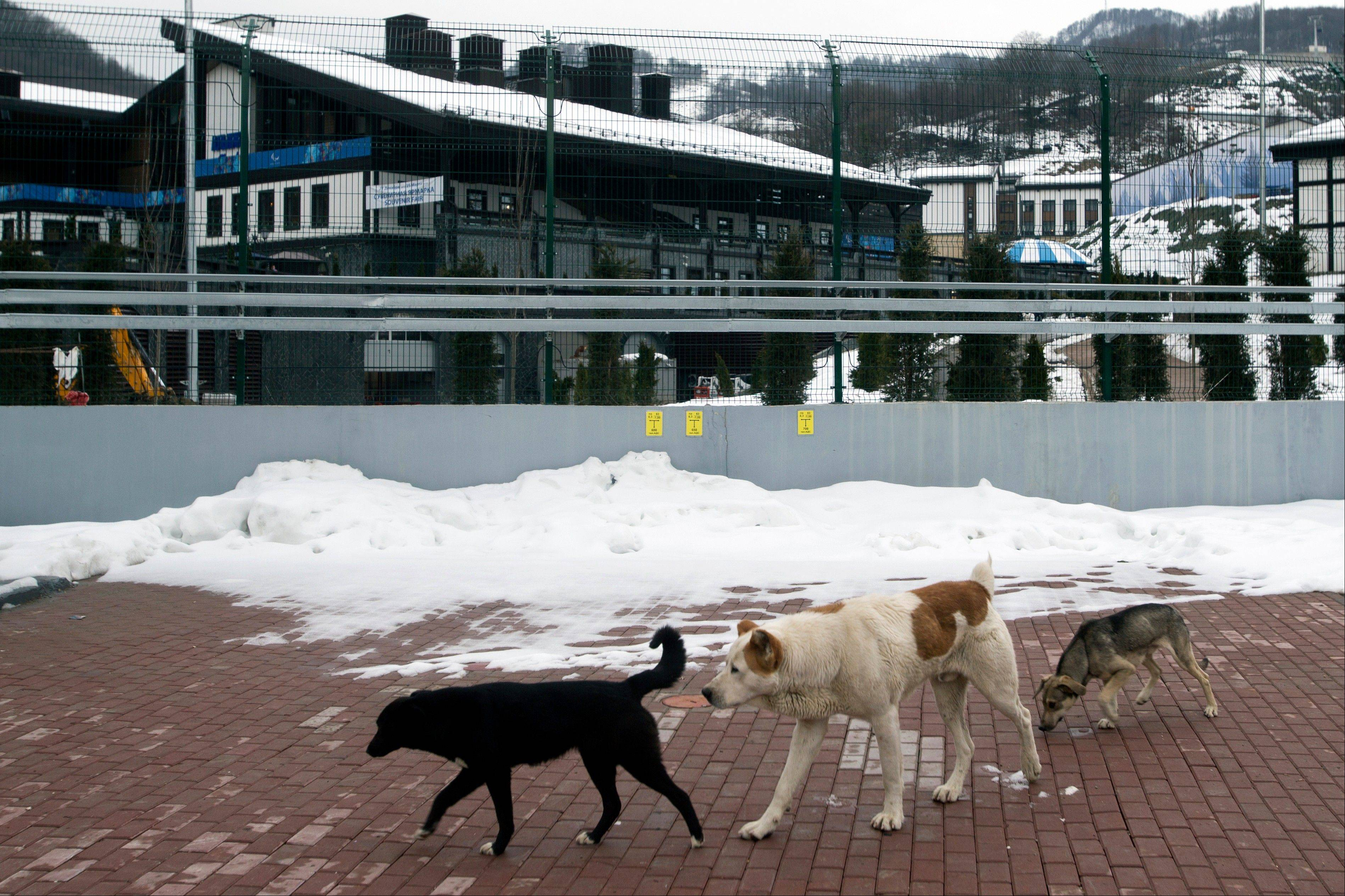 Stray dogs sit outside the Rosa Khutor Extreme Park course, a venue for the snowboarding and freestyle competitions of the 2014 Winter Olympics, in Sochi, Russia, Monday, Feb. 3, 2014.