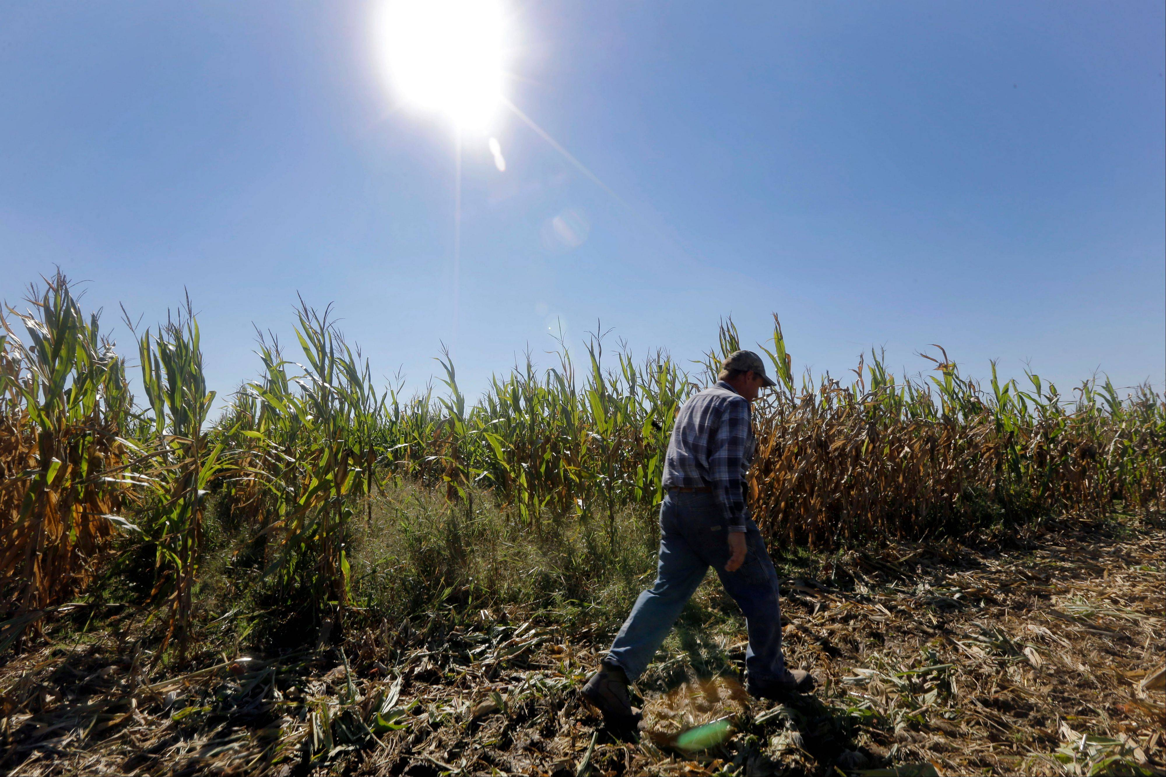 Lawmakers are betting that government-backed private farm insurance will be better than the program being replaced: a direct-payment system that distributed $5 billion a year based on acreage. Supporters of the change say payouts based on losses is more cost-effective and targets farmers in need.