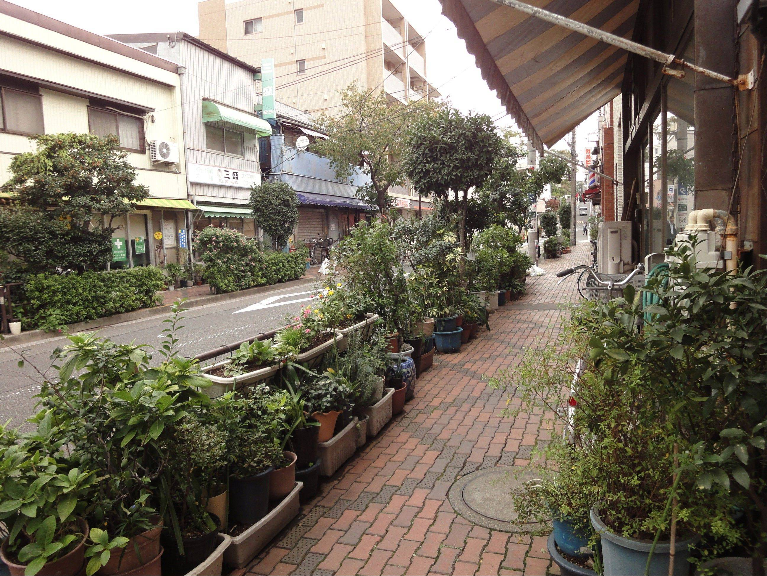 Despite the lack of yards, the narrow streets of Yanaka in Tokyo are lined with gardens that residents and shopkeepers maintain in flowerpots.