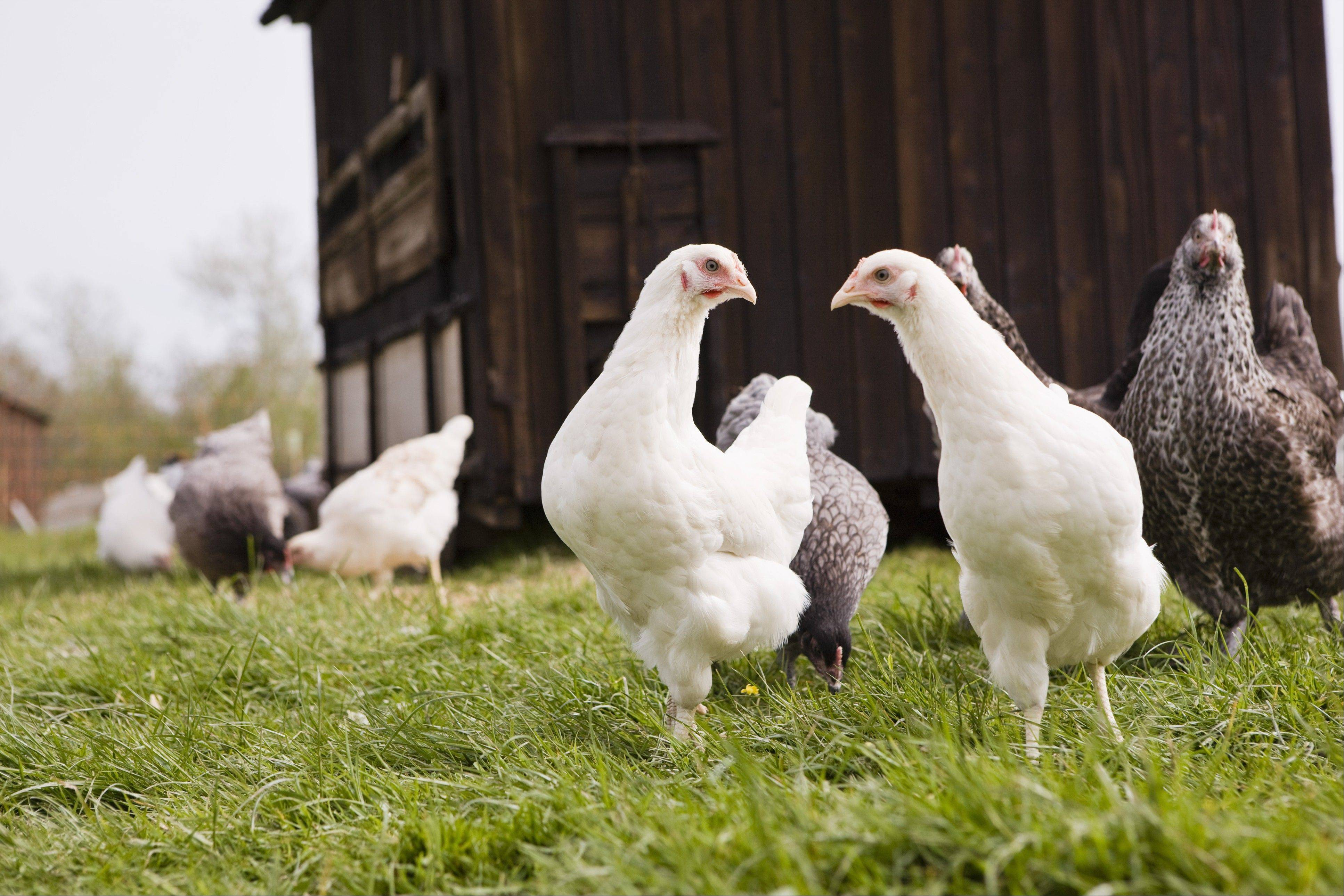 Missouri's attorney general has asked a federal court to strike down a California law regulating the living conditions of chickens, setting up a cross-country battle that pits new animal protections against the economic interests of Midwestern farmers.