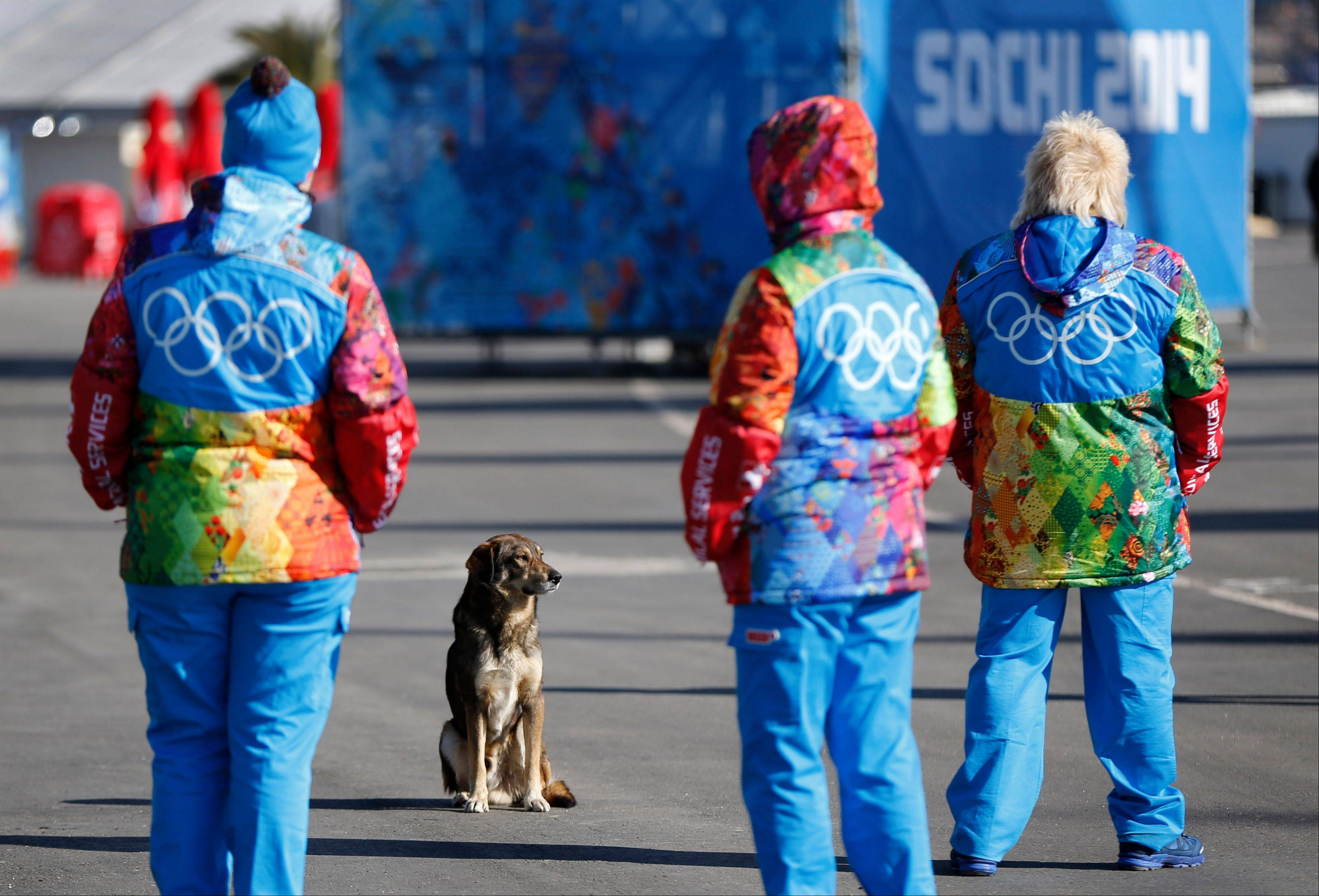 A stray dog sits near Olympic volunteers in Olympic Park ahead of the 2014 Winter Olympics, Thursday, Feb. 6, 2014, in Sochi, Russia.