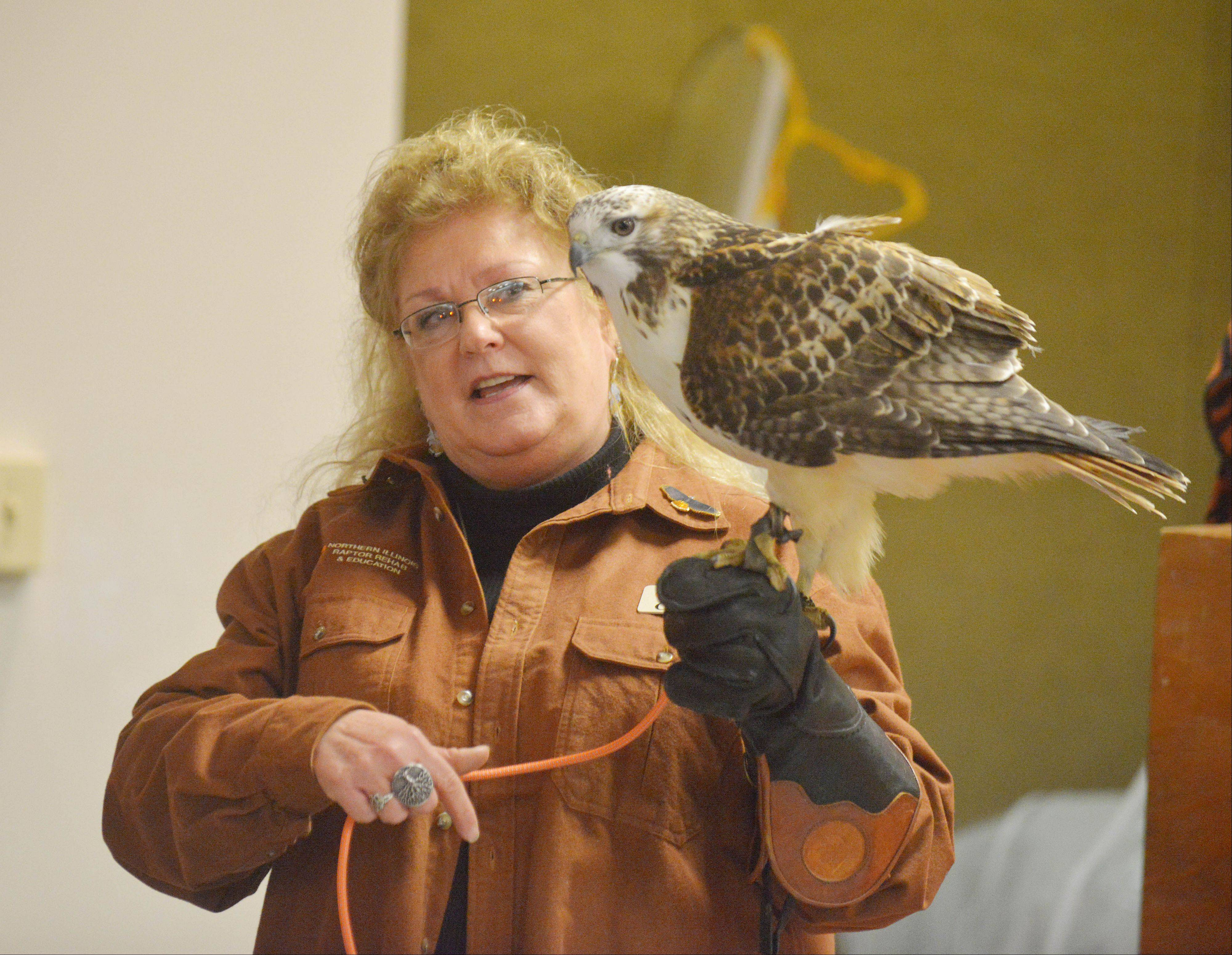 Candy Ridlbauer of Northern Illinois Raptor Rehab and Education offered Birds of Prey, a program on rescue, rehabilitation and release of these birds Saturday at Roselle Public Library. She is holding a red-tailed hawk.