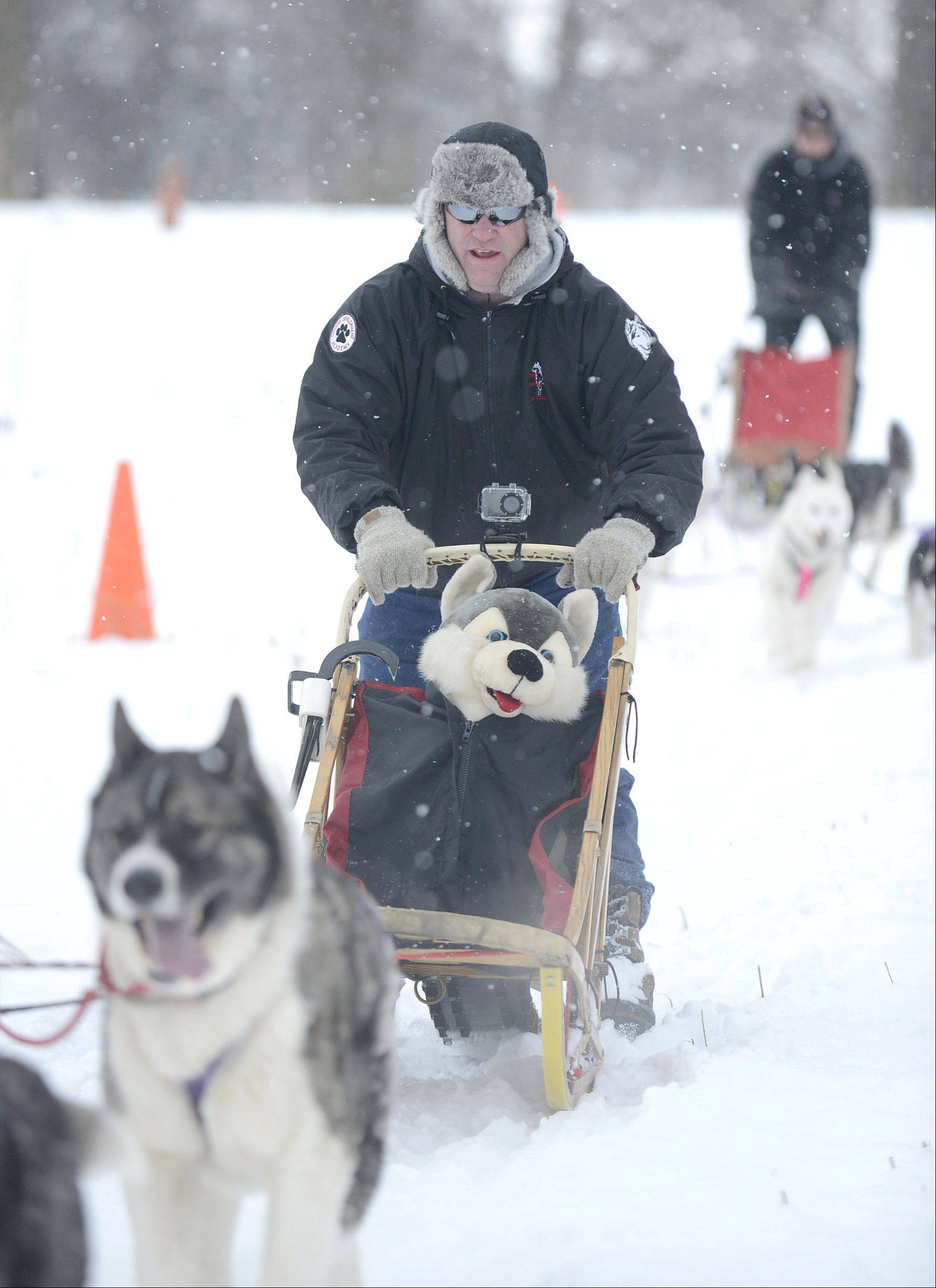 Jason Hussong of Machesney Park leads the Free Spirit Siberian Rescue sled demo team at Hickory Knolls Discovery Center in St. Charles on Saturday. Hussong, representing the Harvard-based rescue, started mushing in 2006 and organized the team for the rescue.