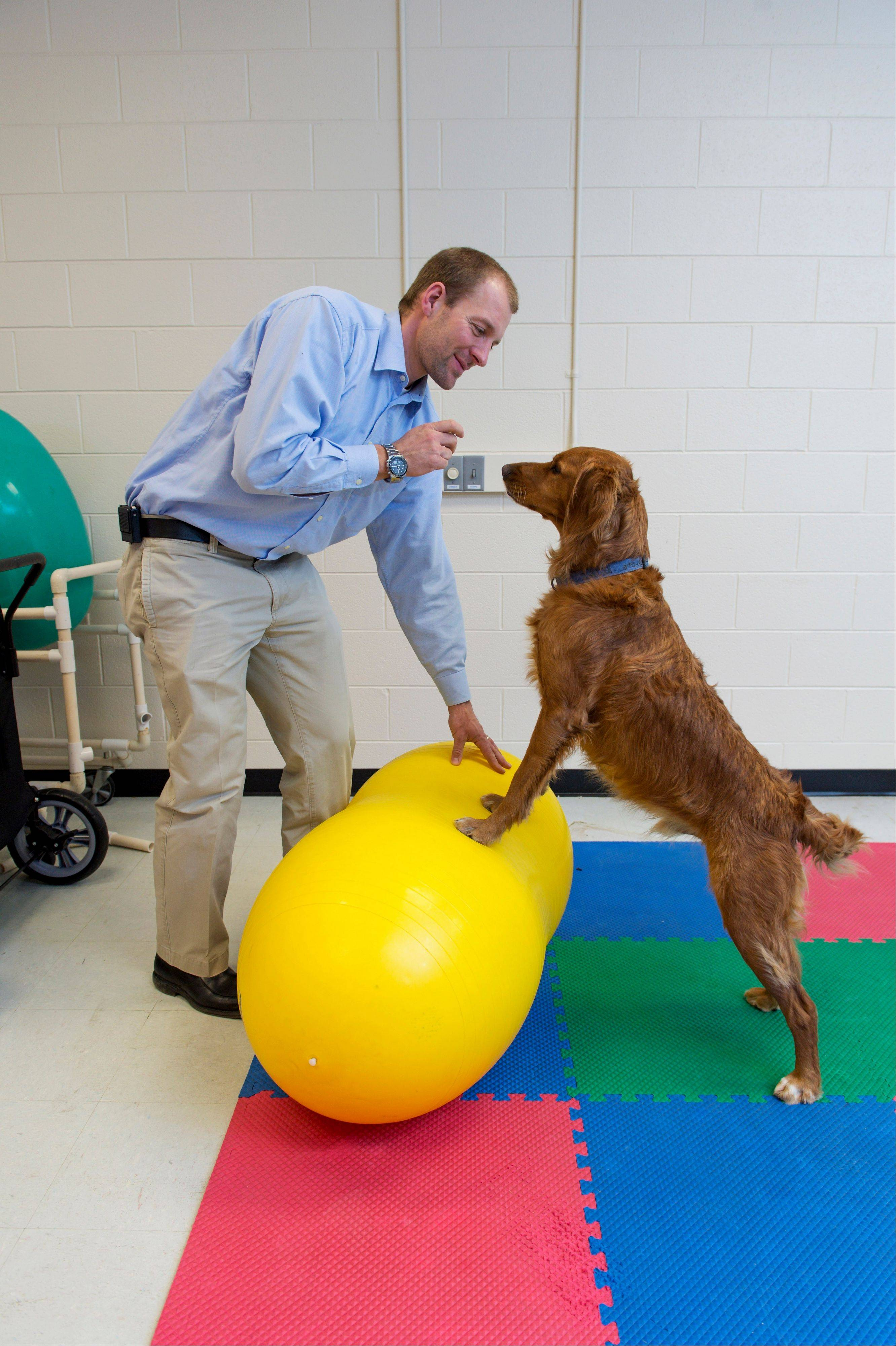 Dr. Felix Duerr and a golden retriever named Zack demonstrate a core stabilization exercise at the Small Animal Orthopaedics at the College of Veterinary Medicine and Biomedical Sciences, in Fort Collins, Colo.