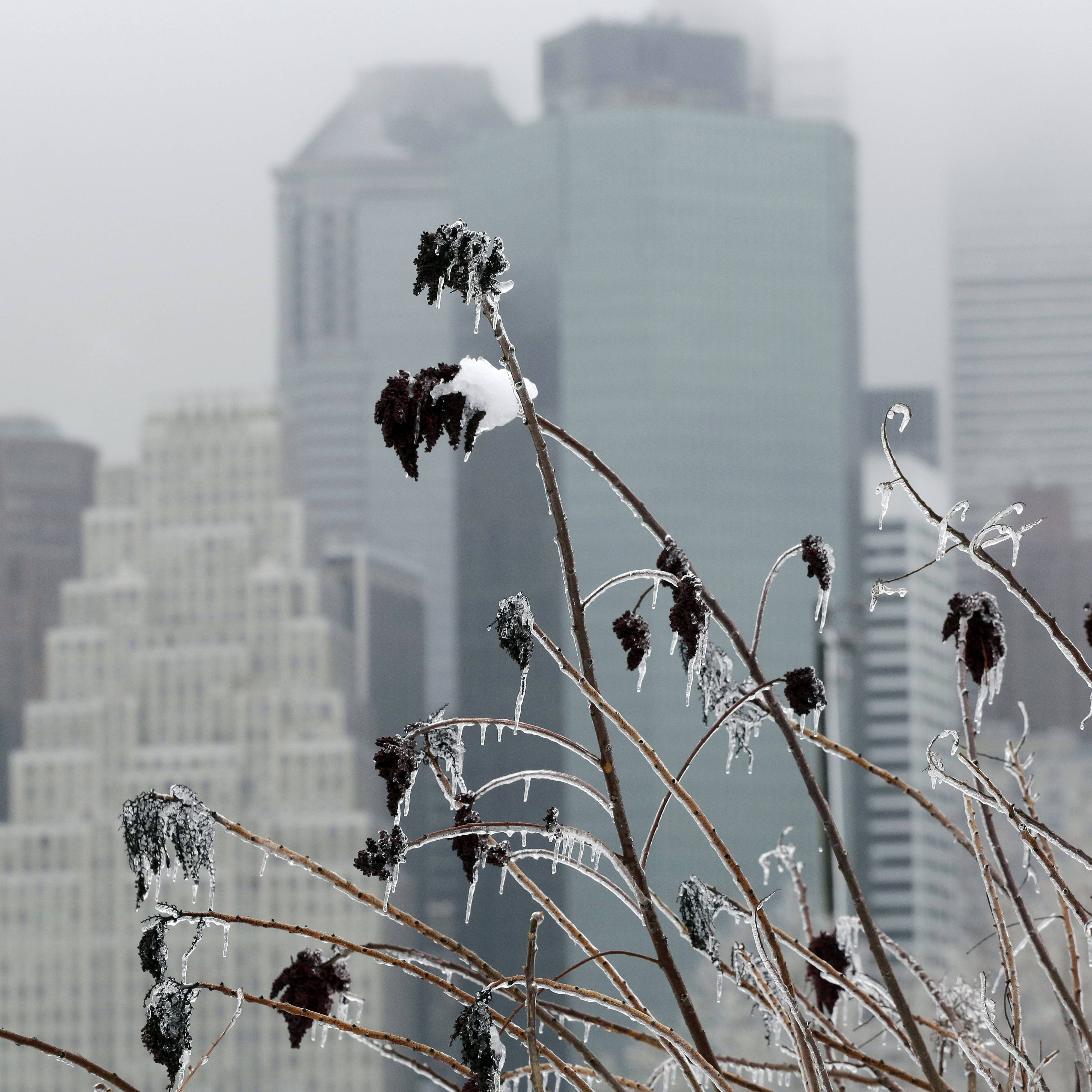 Icicles coat grasses along the Brooklyn waterfront with the Manhattan skyline in the background, Wednesday, Feb. 5, 2014 in New York. Gov. Andrew Cuomo declared a statewide state of emergency, closing Interstate 84 between the Connecticut and Pennsylvania borders until midafternoon.