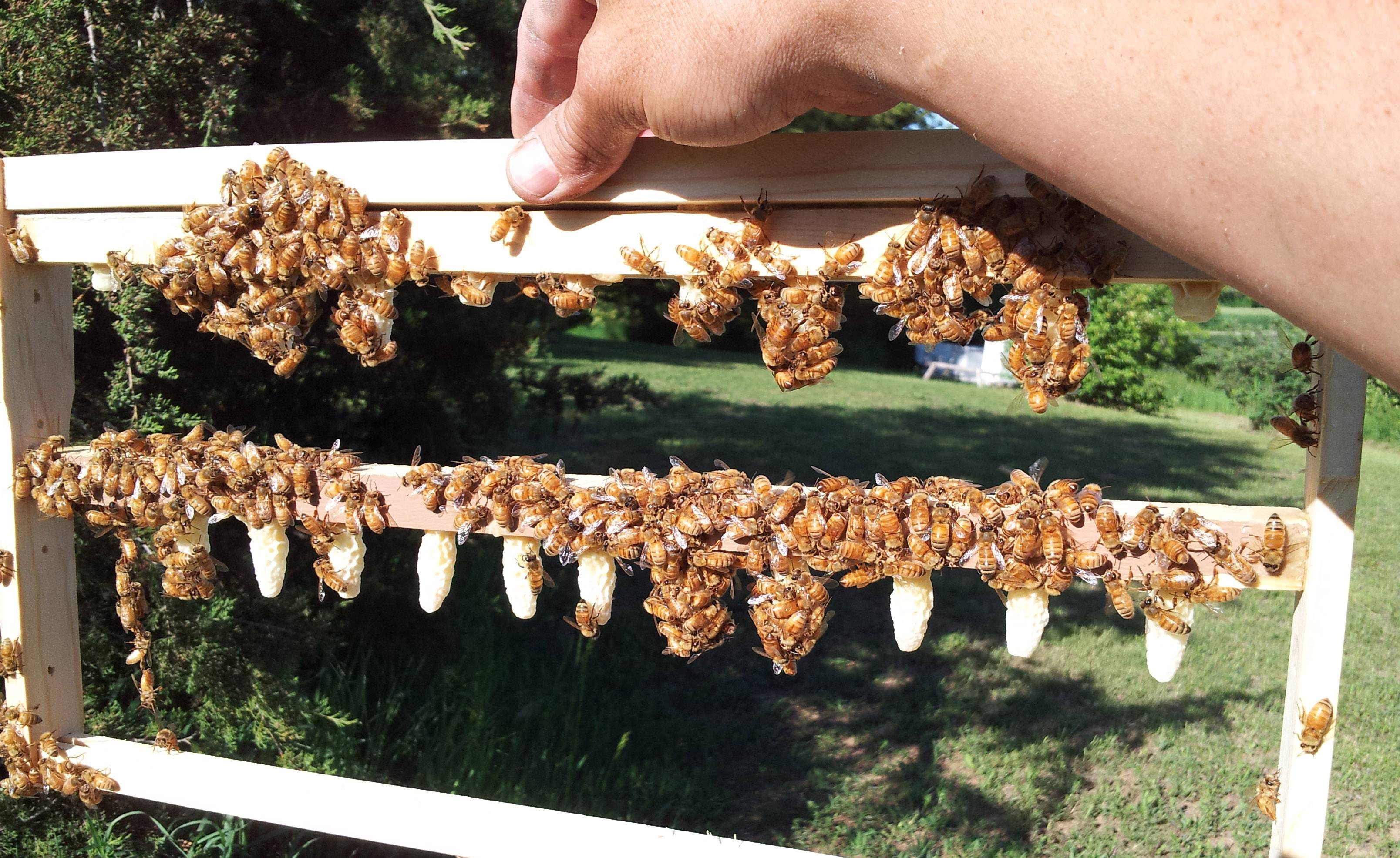 Al Wagner raises queen bees in Fox Lake.