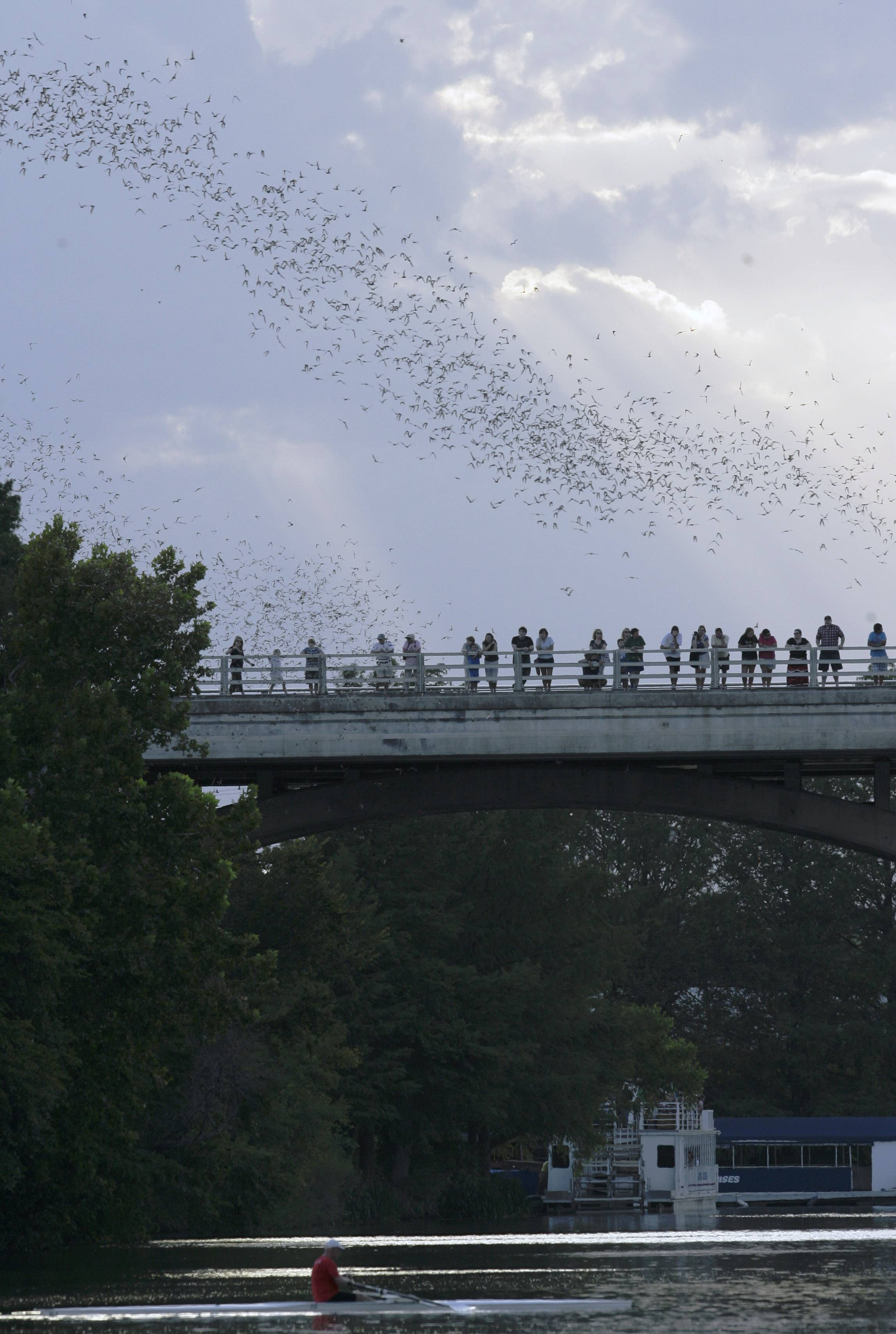 Spectators stop and watch as some of the more than 1.5 million bats emerge from the Congress Avenue bridge in Austin, Texas.