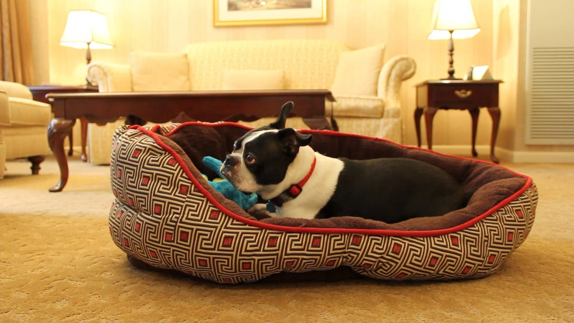 Treat your dog to a day and night in Chicago with the Talbott Hotel's dog-friendly package.