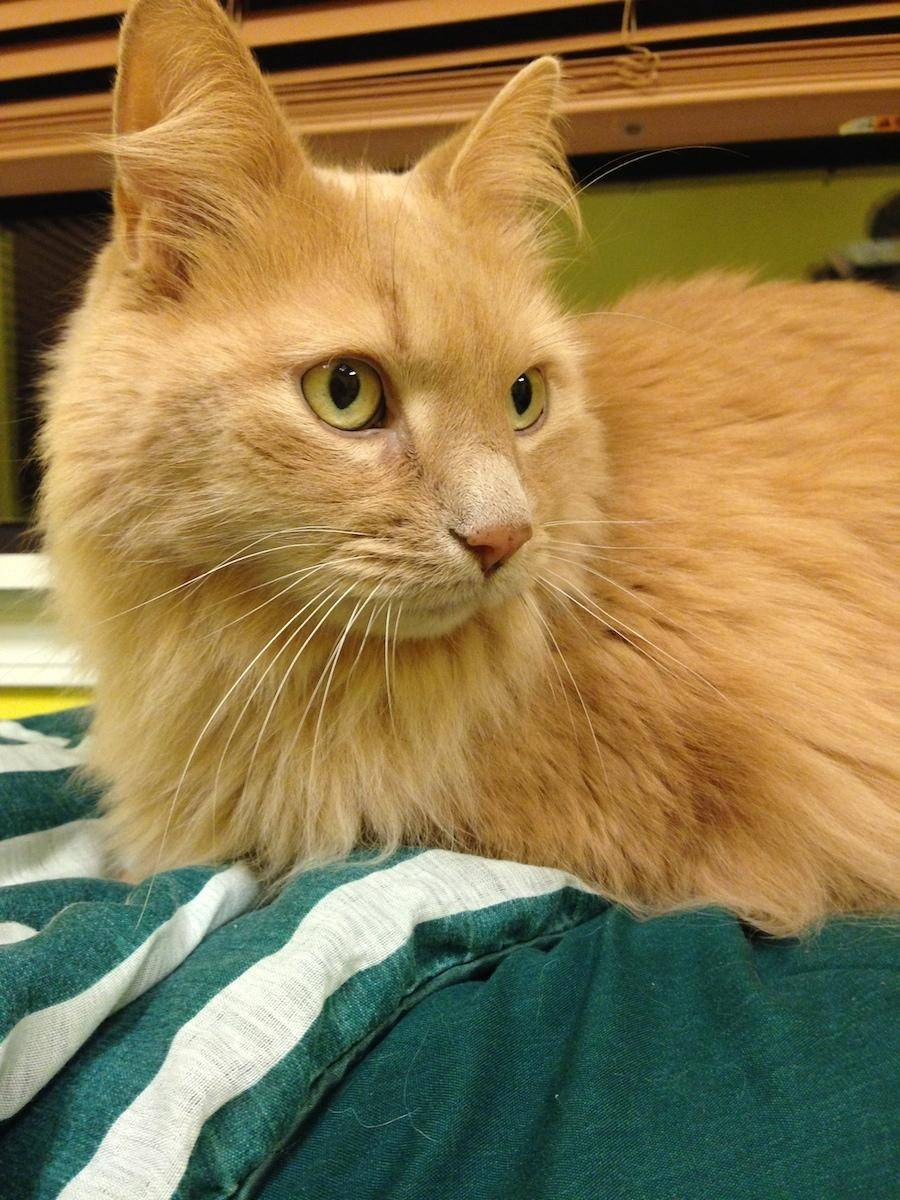 Cashmere, a 10-year-old, male.