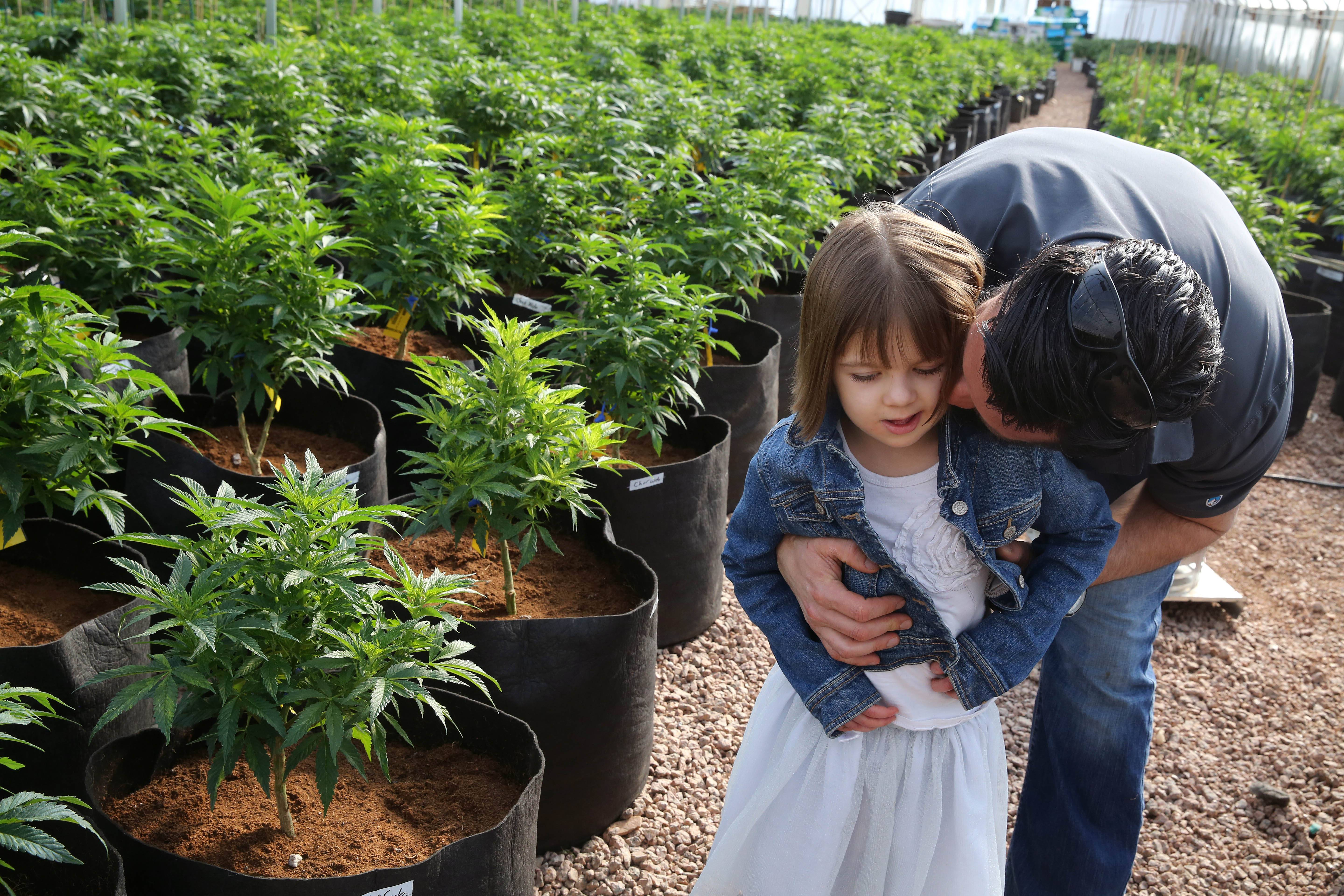 Matt Figi hugs and tickles his once severely-ill 7-year-old daughter Charlotte, as they wander around inside a greenhouse for a special strain of medical marijuana known as Charlotte's Web, which was named after the girl early in her treatment, in a remote spot in the mountains west of Colorado Springs, Colo.