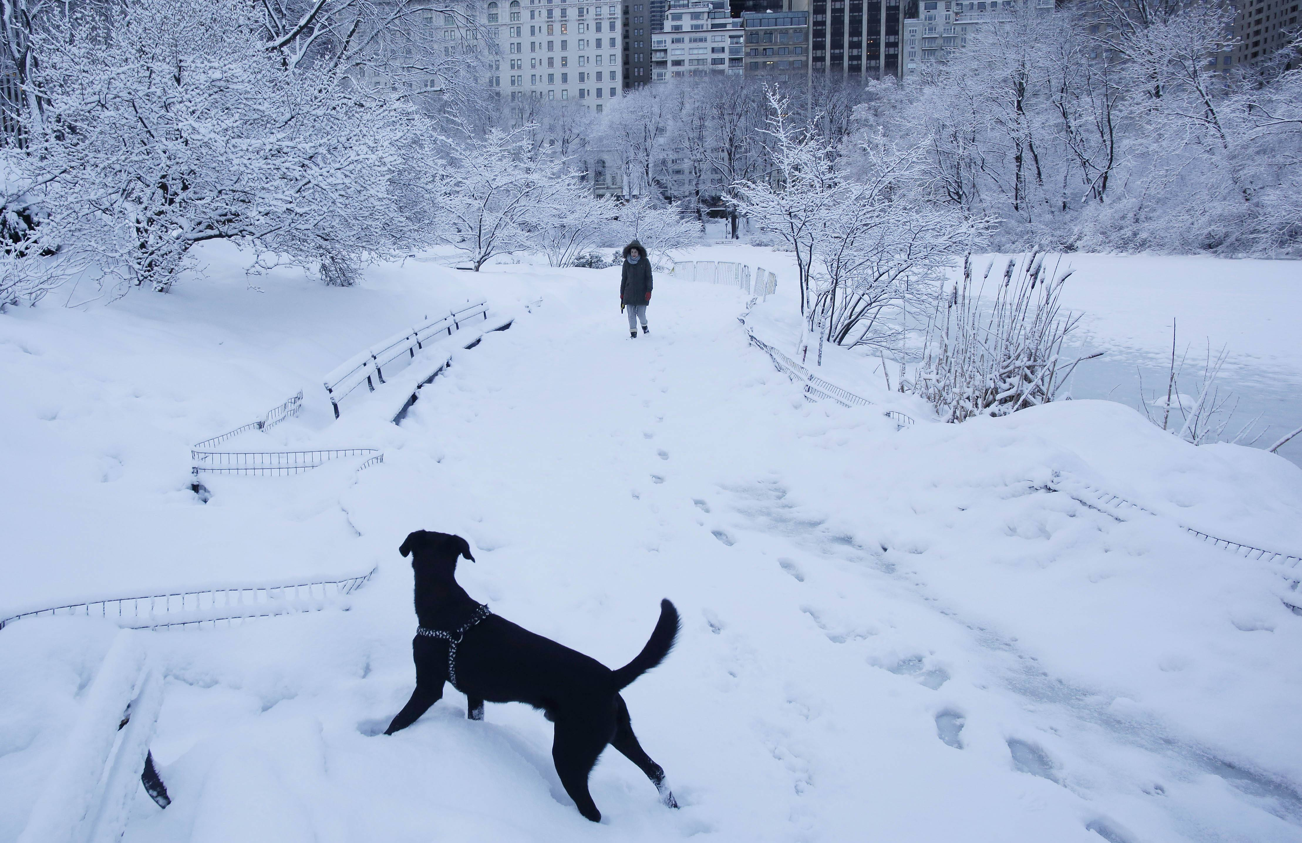 A woman and her dog go for a walk in Central Park, Friday, Feb. 14, 2014 in New York. Another winter storm brought snow and ice to the East Coast.