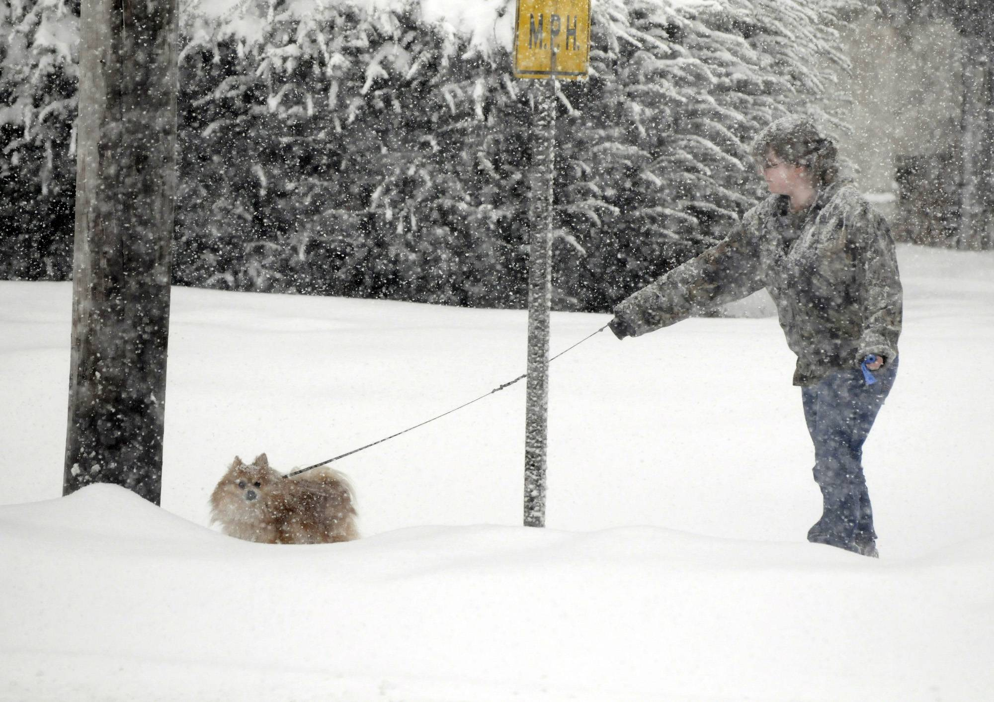 Leesha Ague, of Moline, Ill., gets covered in snow while she waits for Bear, her 4-year-old Pomeranian, to make a decision during a quick walk along 7th Avenue in Moline, Ill., Monday, Feb. 17, 2014. The National Weather Service on Monday forecast up to 8 inches of snow for areas of northern Illinois and 5 inches in central Illinois.