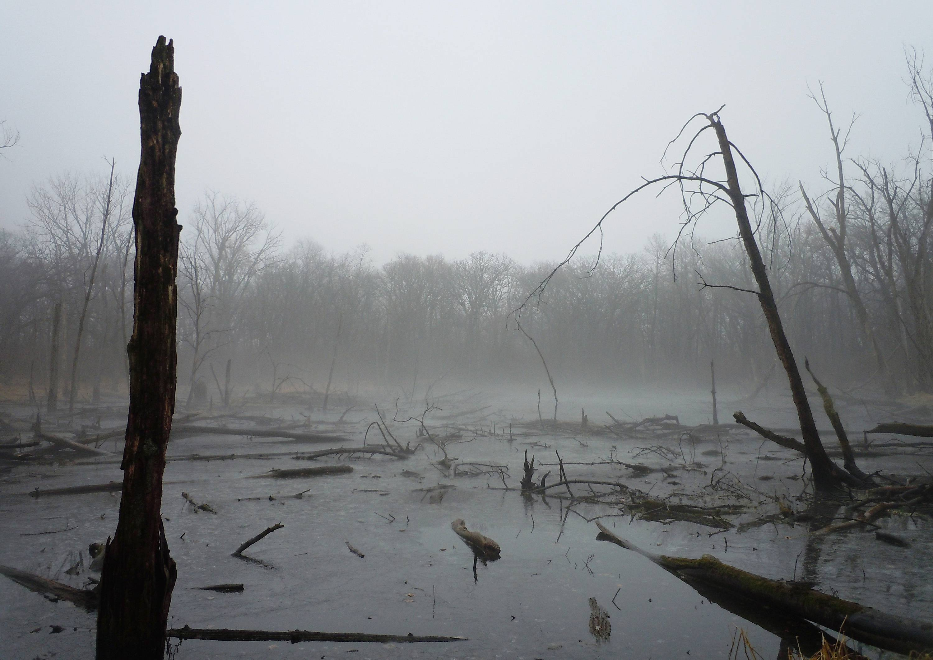 This photo was taken of a wetland at Rutland Forest Preserve in early December 2013. The weather conditions created an eerie glow, making it a perfect photo opportunity.