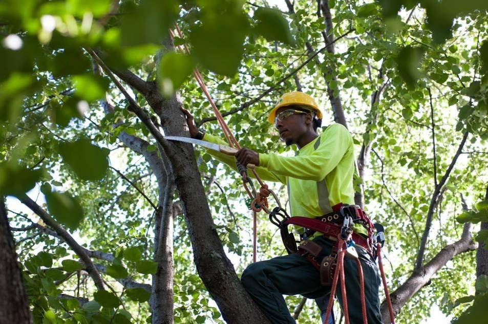 Proper pruning of your trees will allow them to grow strong.
