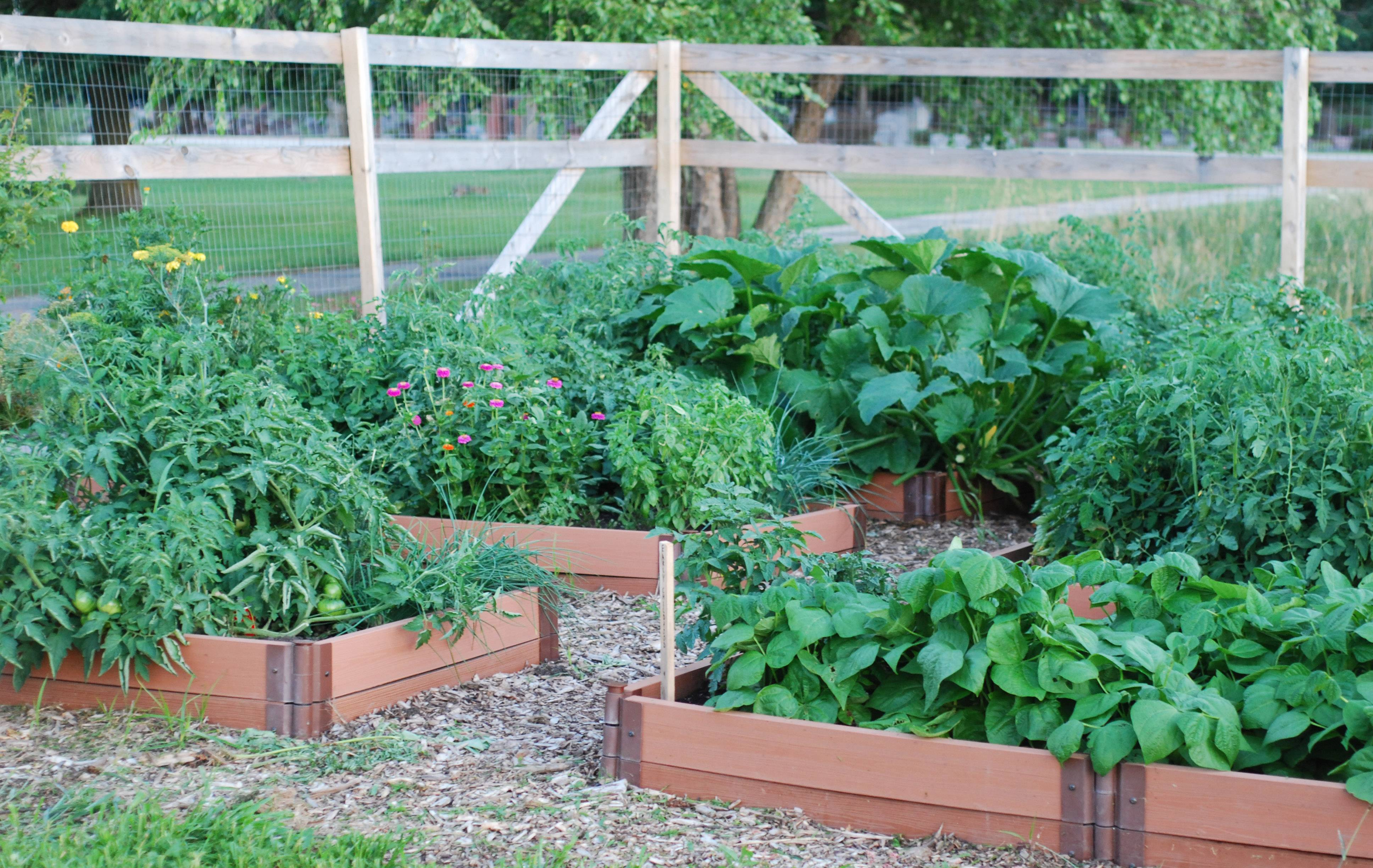 Boxes flourish with flowers and vegetables at the Millburn School and Community Garden project.