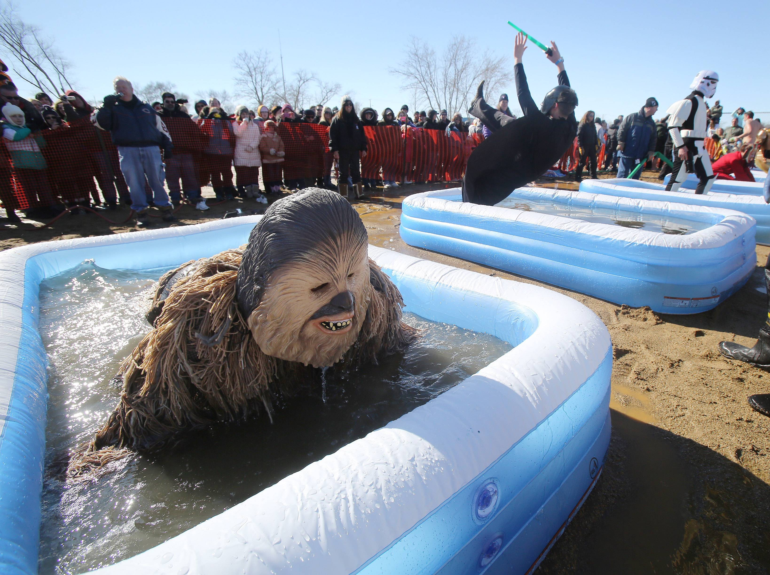 Grayslake Police Department members Joe Holtz, as Chewbacca, left, and Steve Teschner, as Darth Vader, dive in the pools during Fox Lake's Polar Plunge Sunday at Lakefront Park. The ice on the lake was over two feet thick and could not be cutout this year, so almost 500 participants took to jumping into frigid pools set up near the lake.