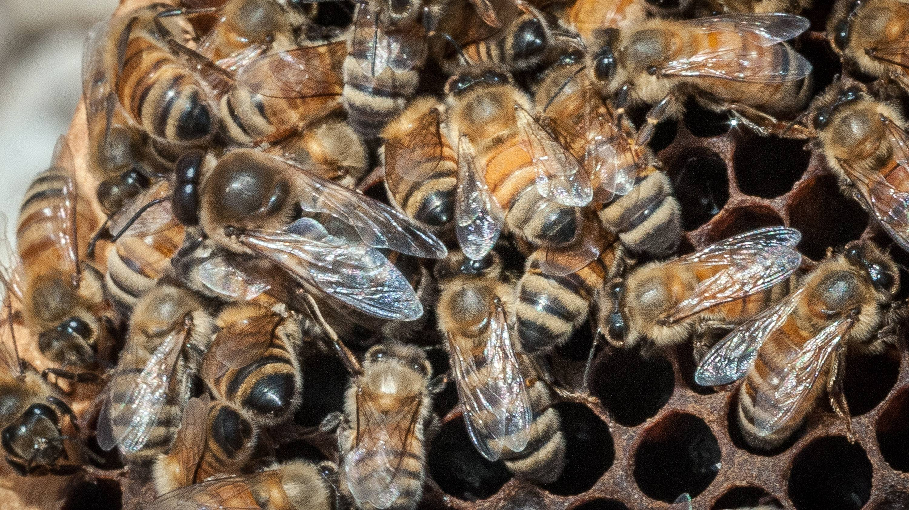 USDA spending $3M to feed honeybees in Midwest