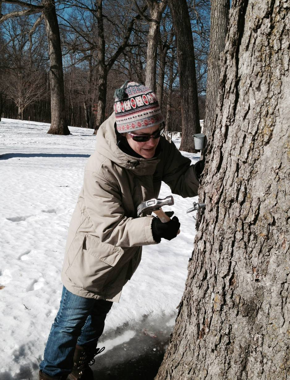 Lake County Forest Preserve Environmental Educator Jennifer Berlinghof taps a sugar maple tree at Ryerson Woods Monday, Feb. 24, in preparation of the upcoming annual Maple Syrup Hikes.
