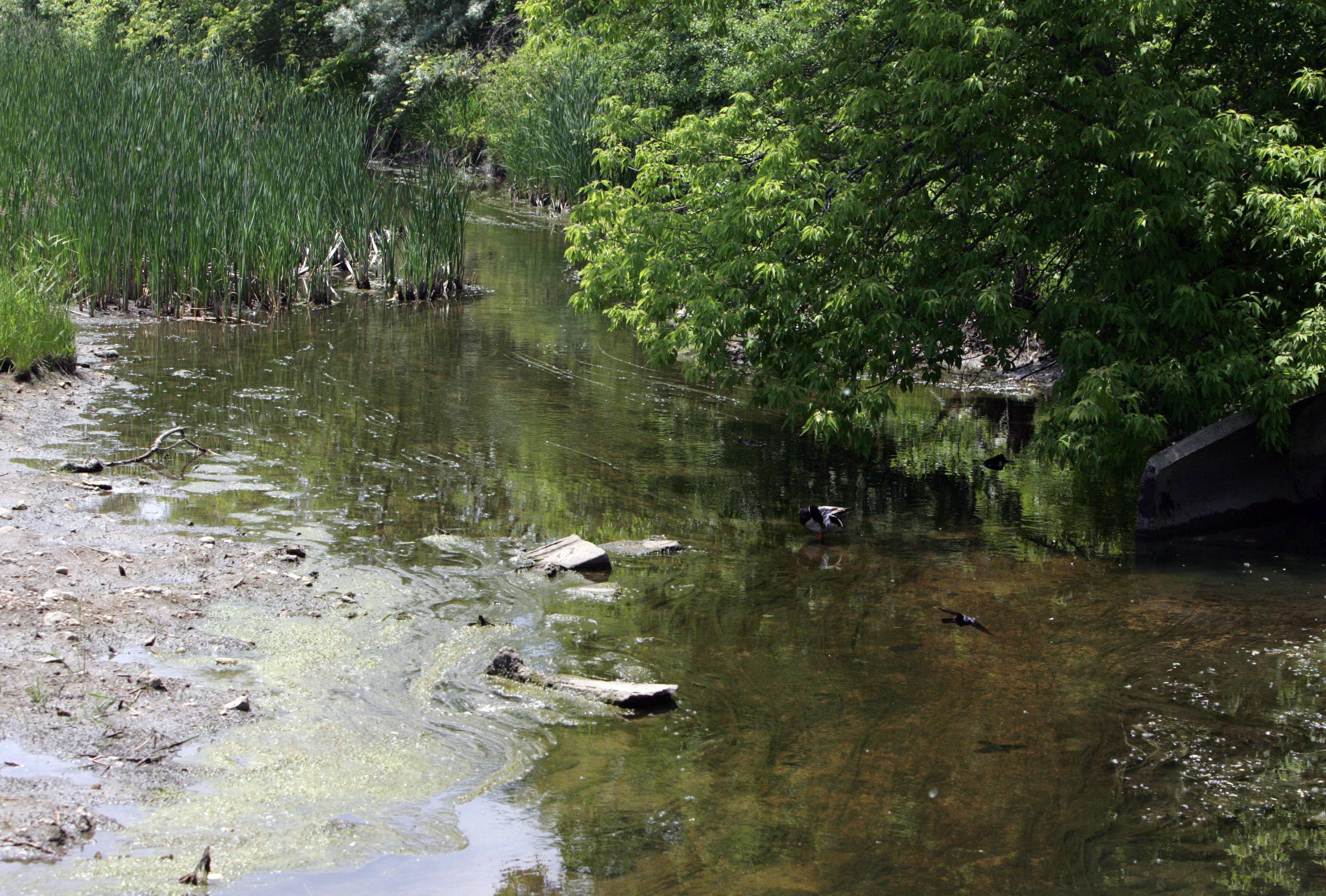 Work aimed at improving the water quality of Buffalo Creek will be among the major projects taken on this year by the Buffalo Grove Environmental Action Team, according to a presentation to village leaders this week. The group also plans to conduct a third annual Green Fair in June.