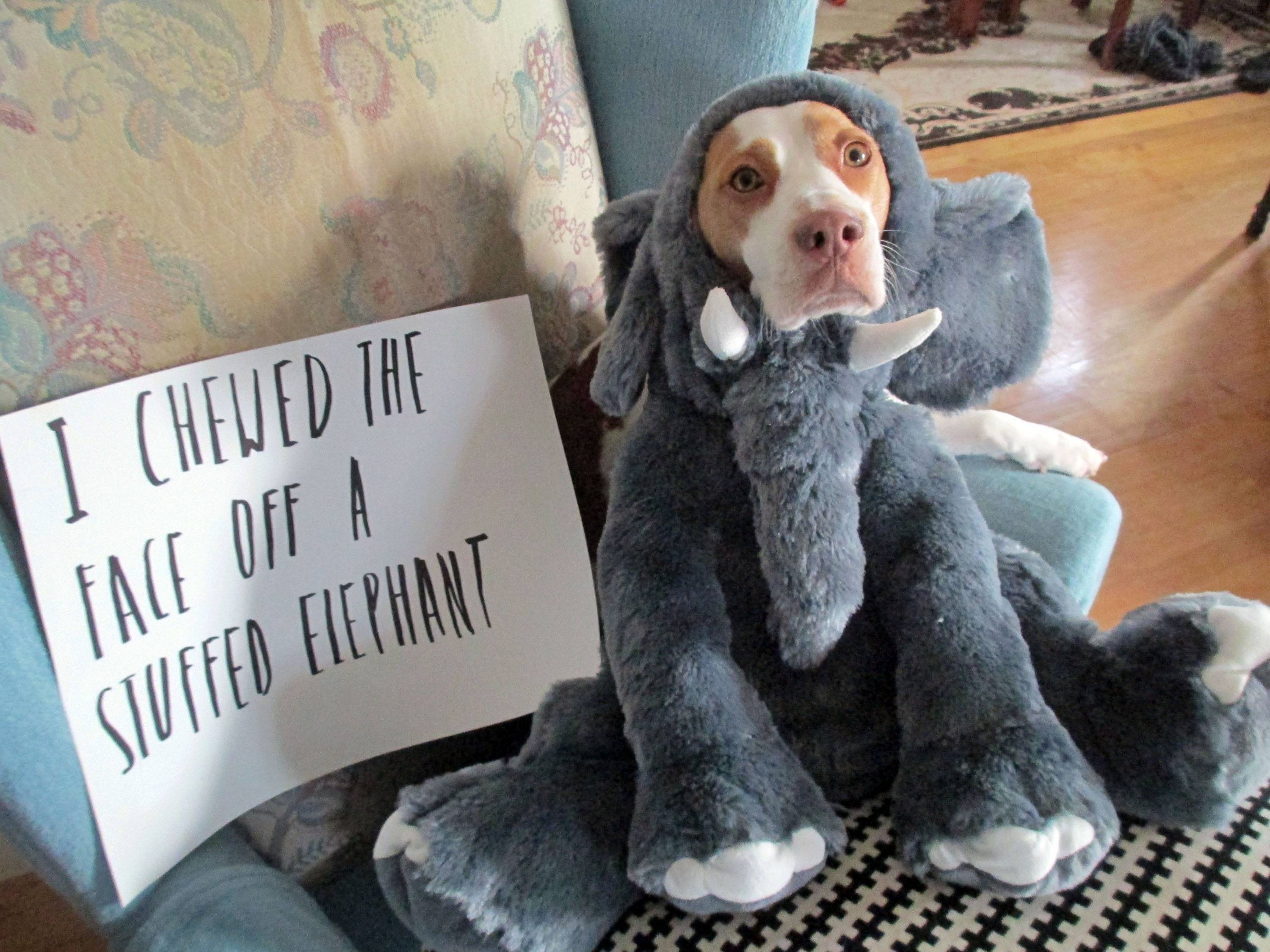 Scientific findings haven't put a dent in the popularity of online dog shaming sites like dogshaming.com and shameyourpet.com or videos like those posted on YouTube.