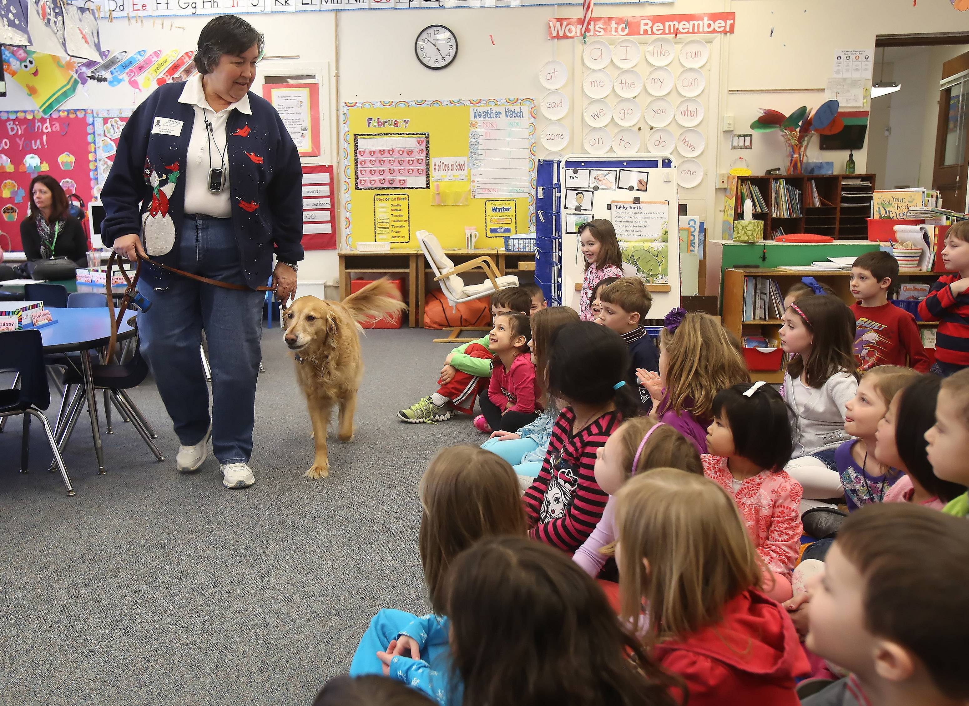 Students learn about the work done by therapy dog, Payton, a golden retriever, from Cathy Jackson during Kindergarten Career Fair Day at Rockland School in Libertyville. Kindergartners learned about jobs from a librarian, a firefighter, a human resources director and a therapy dog handler.