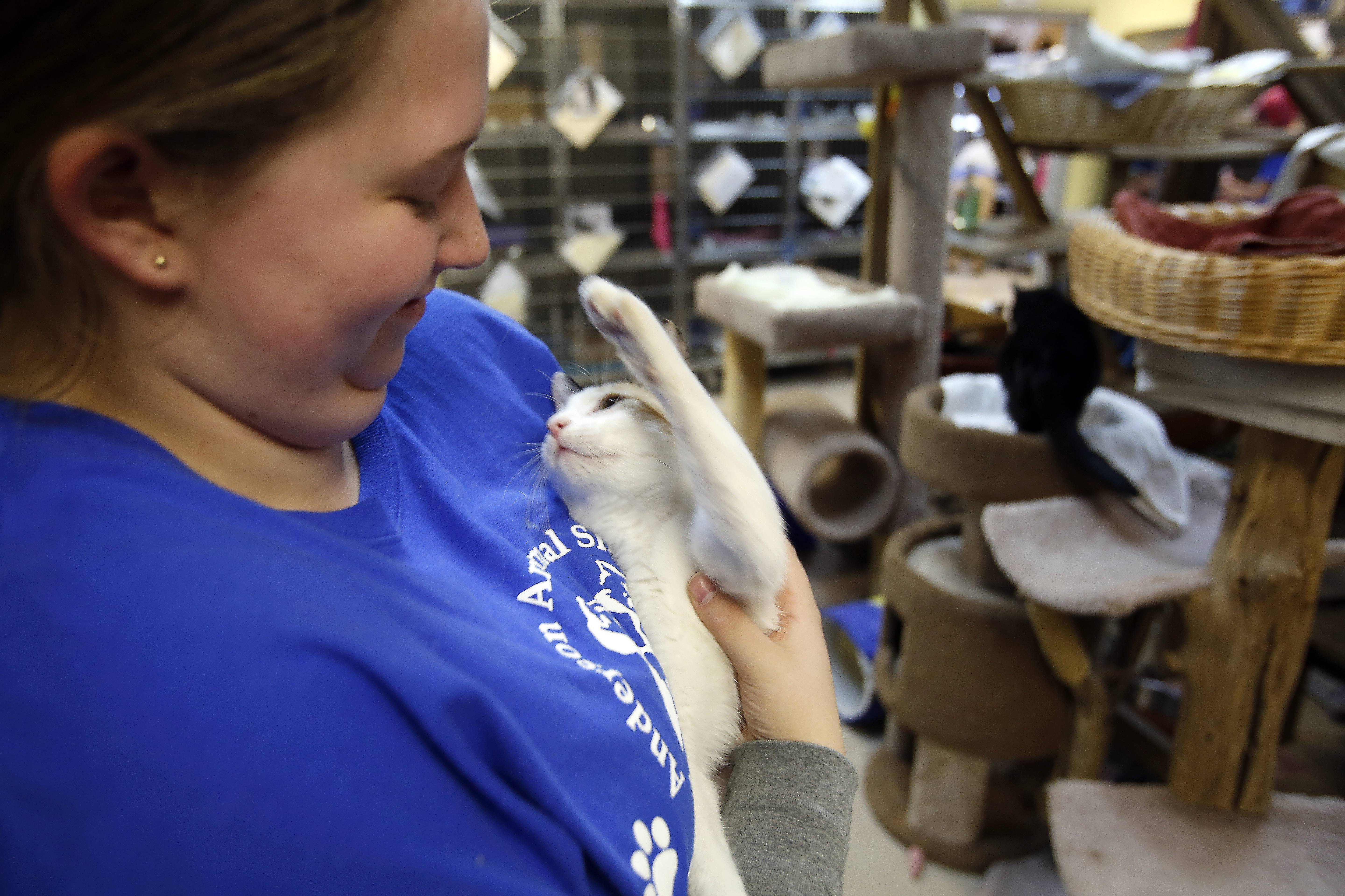 "Alexis Murr, 15, of West Dundee, shares a moment with one of the cats she visits while regularly volunteering at Anderson Animal Shelter in South Elgin. ""I just love animals and want to be a veterinarian when I grow up,"" she said."