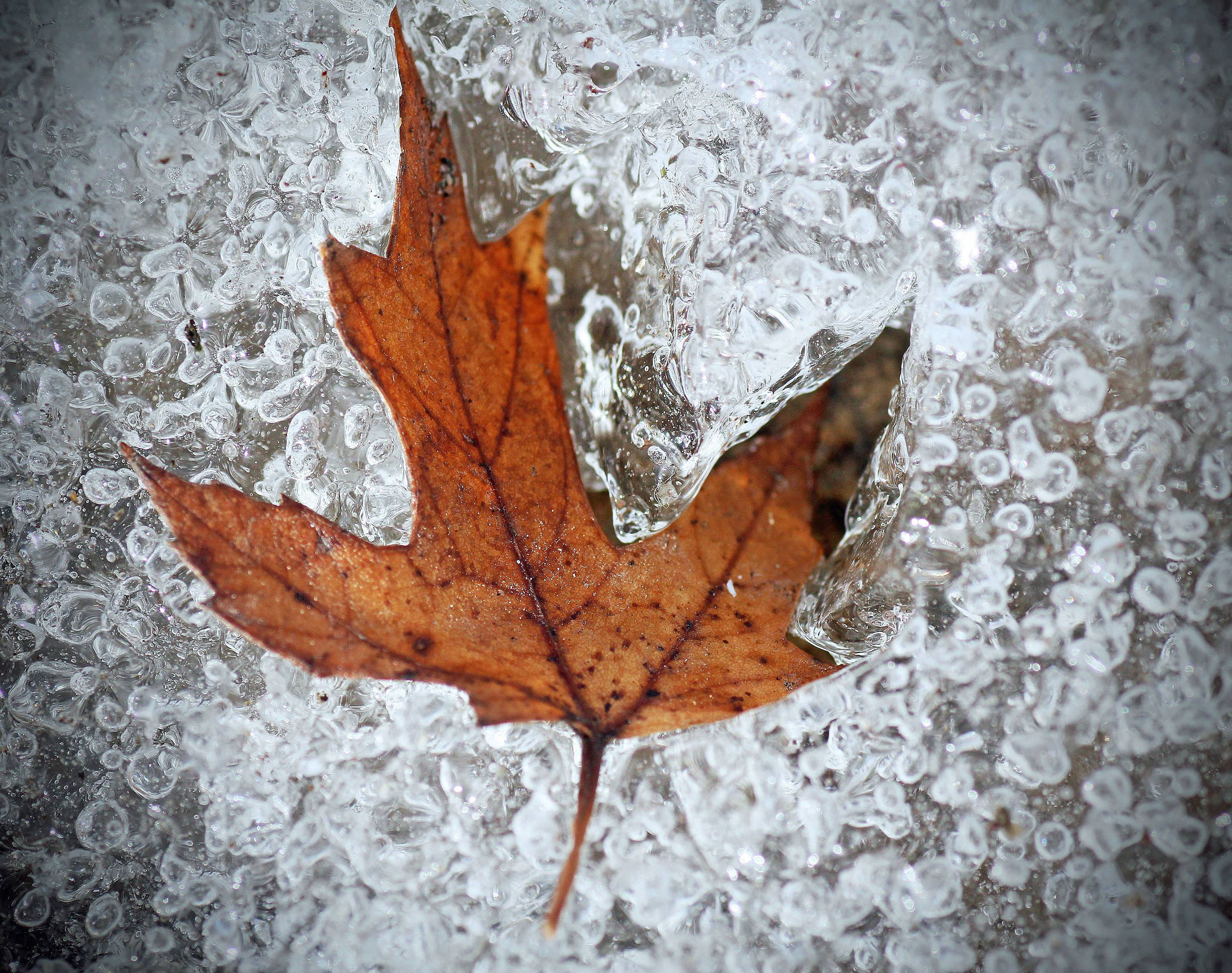 The other day, I was searching for some interesting subjects for photography among the melting snow in the yard. I discovered this remnant of fall trapped beneath the icy grip of winter. I used a 1:1 macro lens to capture the rugged textures of the ice and the smooth accents of the decaying leaf.